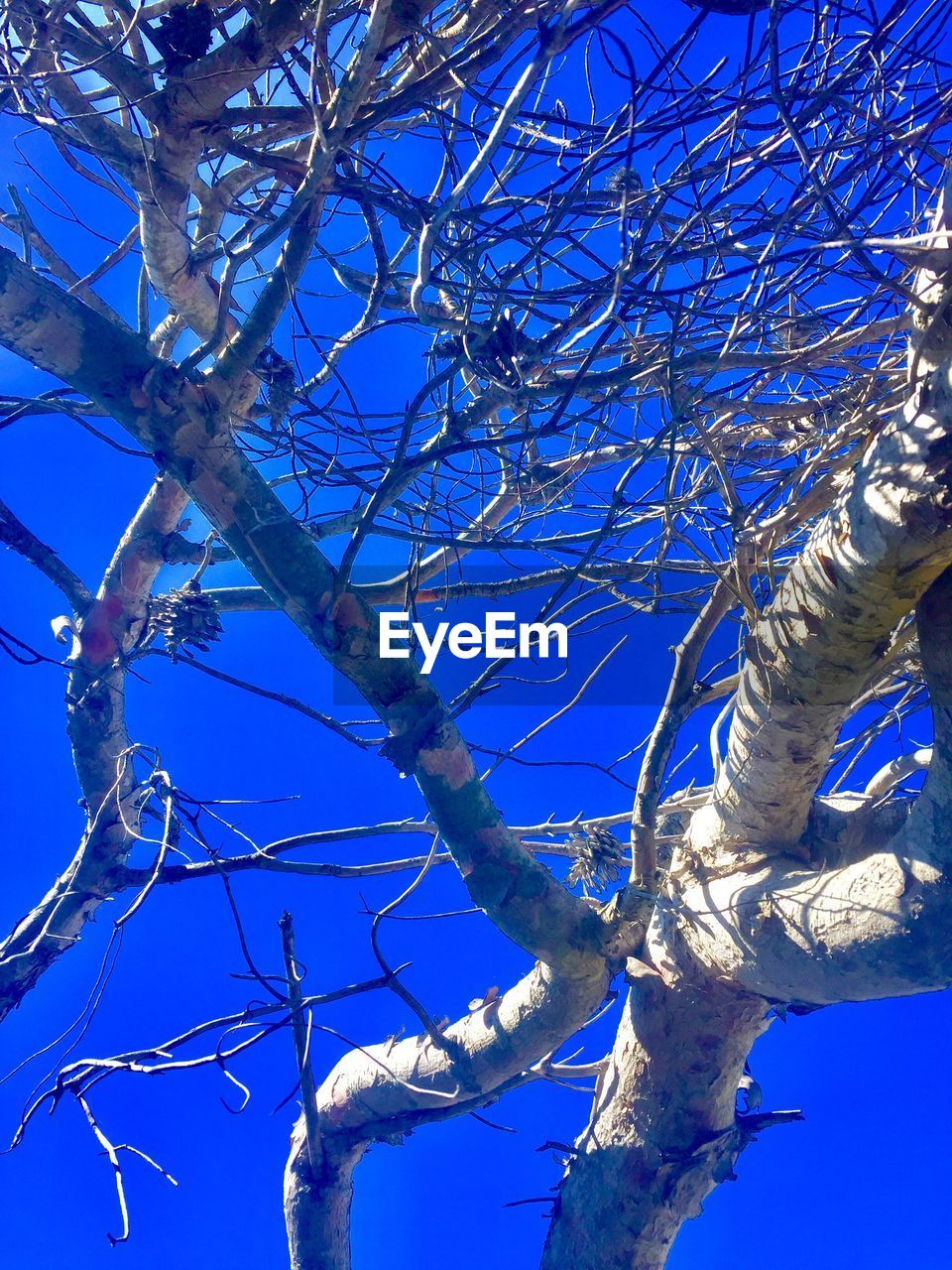 branch, tree, blue, low angle view, nature, day, no people, beauty in nature, growth, bare tree, outdoors, sunlight, clear sky, sky