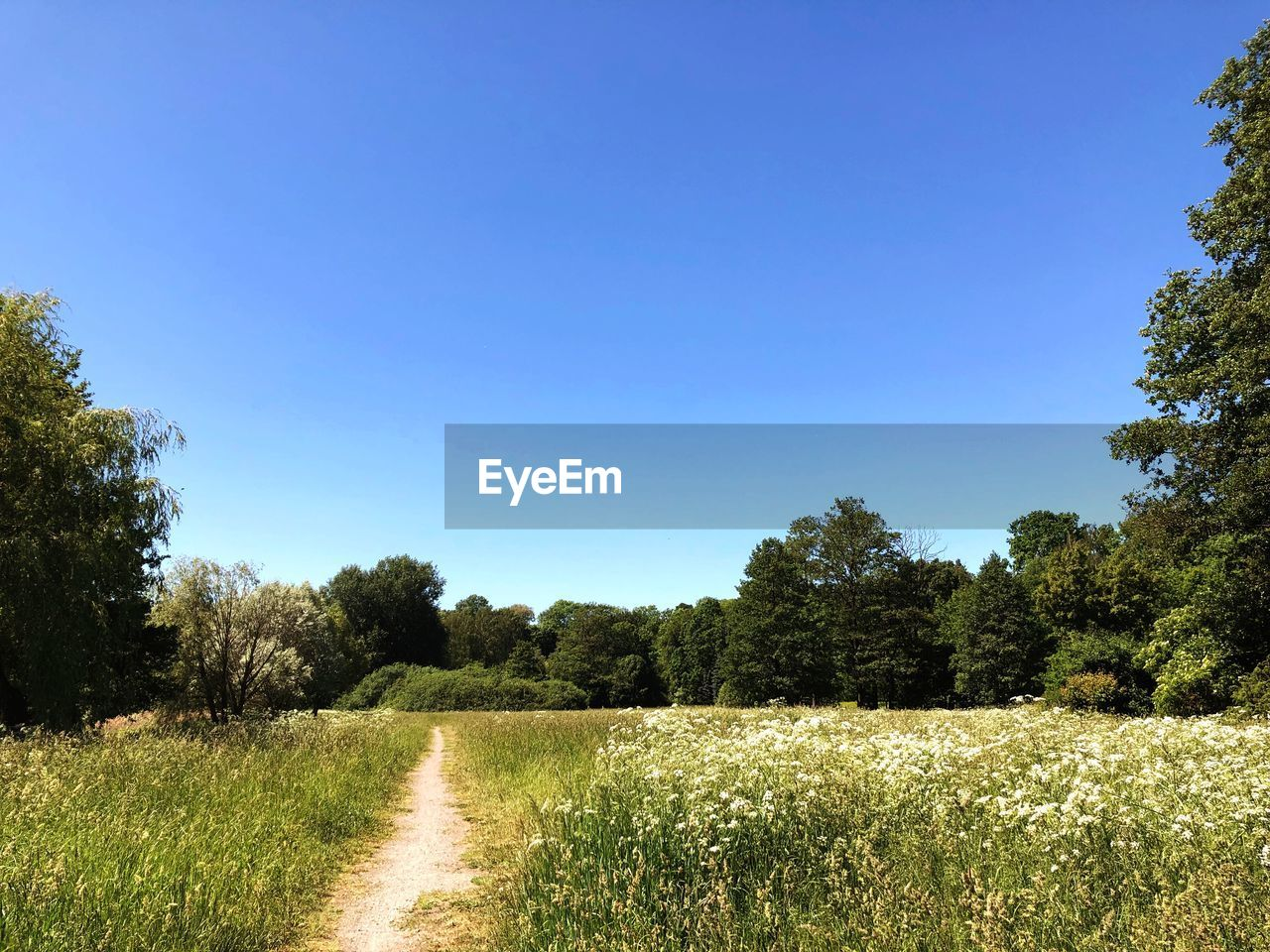 plant, sky, tree, tranquility, tranquil scene, growth, beauty in nature, nature, scenics - nature, landscape, clear sky, environment, day, land, field, grass, copy space, no people, sunlight, non-urban scene, outdoors
