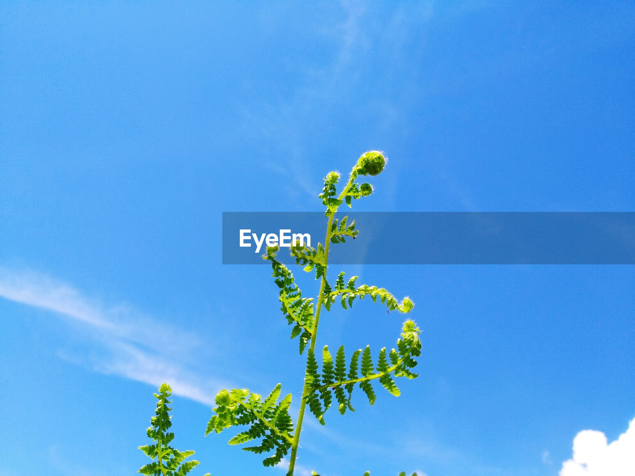 LOW ANGLE VIEW OF BLUE FLOWERING PLANT AGAINST SKY
