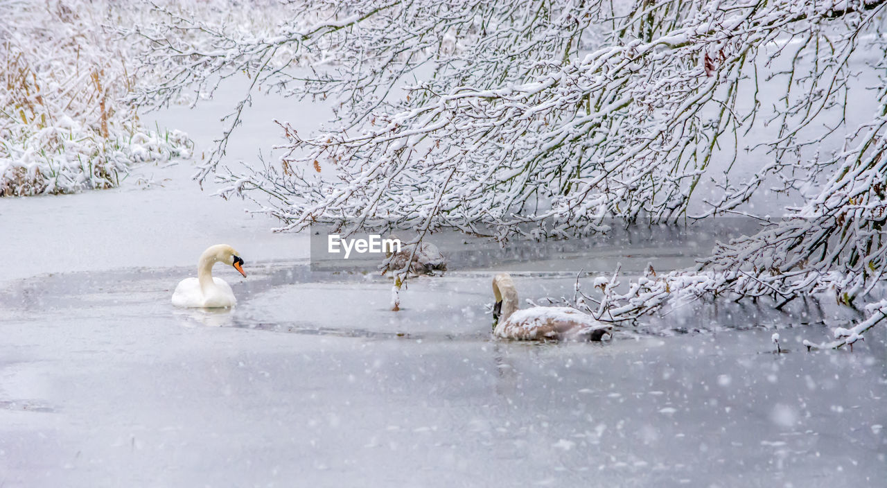 animal themes, animal, snow, cold temperature, vertebrate, group of animals, winter, animals in the wild, animal wildlife, mammal, nature, tree, day, no people, white color, two animals, water, plant, lake, snowing, animal family