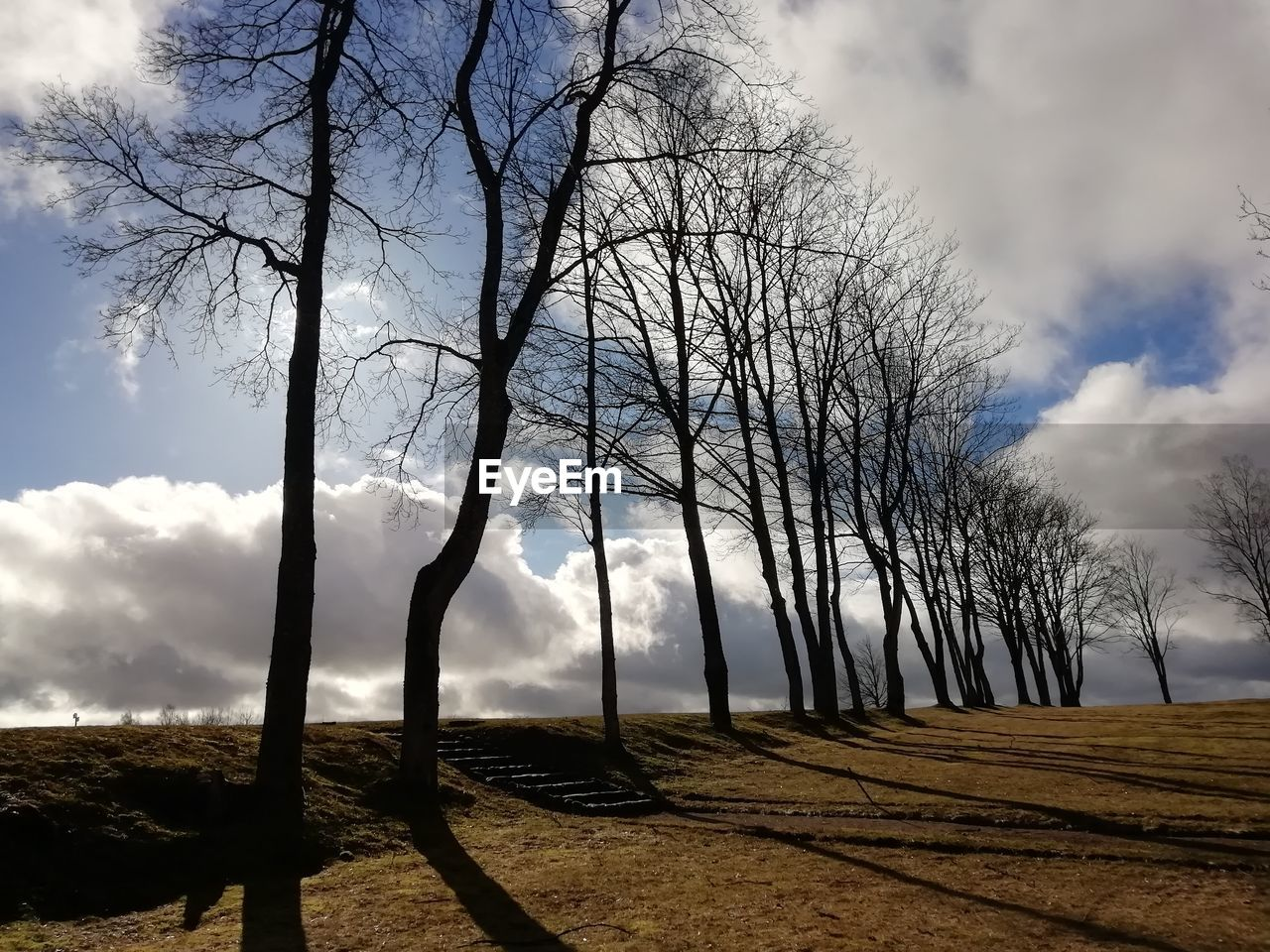 tree, sky, bare tree, cloud - sky, plant, beauty in nature, nature, tranquility, branch, land, scenics - nature, landscape, no people, field, tranquil scene, environment, non-urban scene, tree trunk, trunk, outdoors