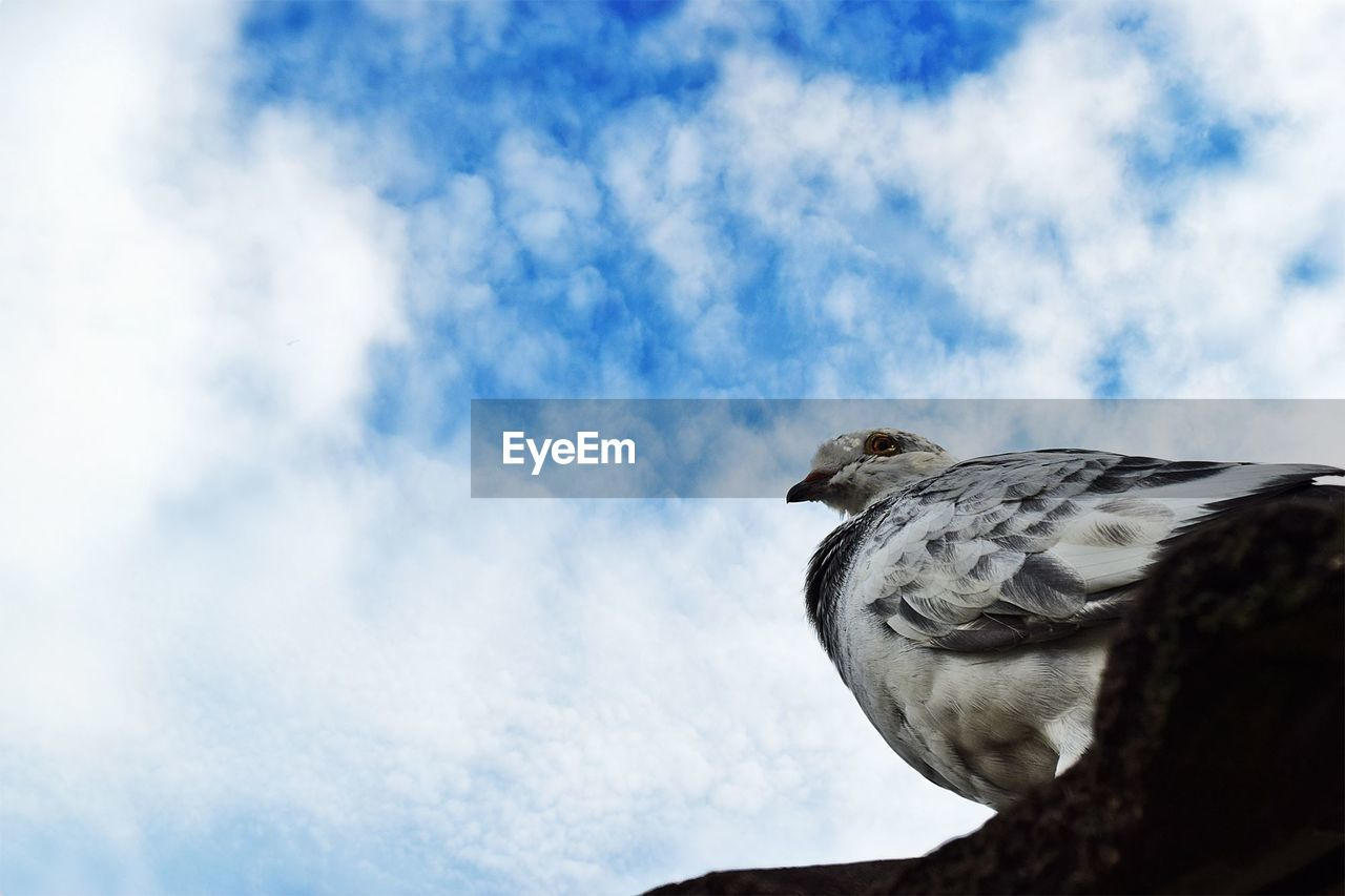 sky, cloud - sky, animal themes, low angle view, animal, one animal, vertebrate, animal wildlife, bird, animals in the wild, day, no people, nature, outdoors, perching, close-up, bird of prey, looking, blue, side view