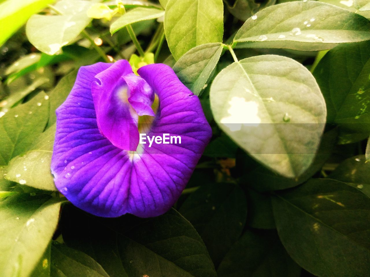 flower, beauty in nature, petal, fragility, nature, freshness, growth, plant, flower head, no people, close-up, day, purple, leaf, outdoors, blooming, water