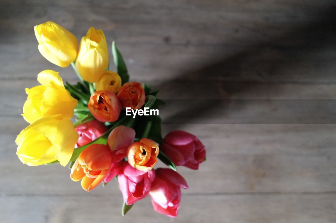flower, petal, rose - flower, fragility, flower head, freshness, beauty in nature, yellow, no people, nature, indoors, day, close-up