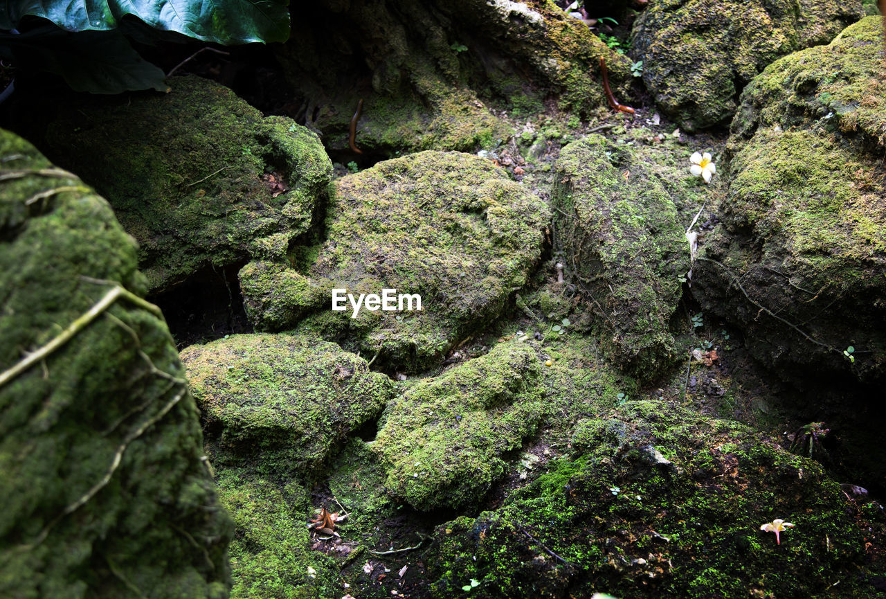plant, tree, growth, no people, nature, moss, beauty in nature, rock, day, forest, tranquility, green color, rock - object, solid, land, outdoors, close-up, environment, tranquil scene, high angle view, flowing water, rainforest