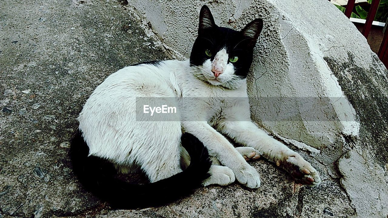domestic cat, pets, animal themes, domestic animals, one animal, feline, mammal, cat, sitting, no people, whisker, looking at camera, day, portrait, lying down, relaxation, outdoors