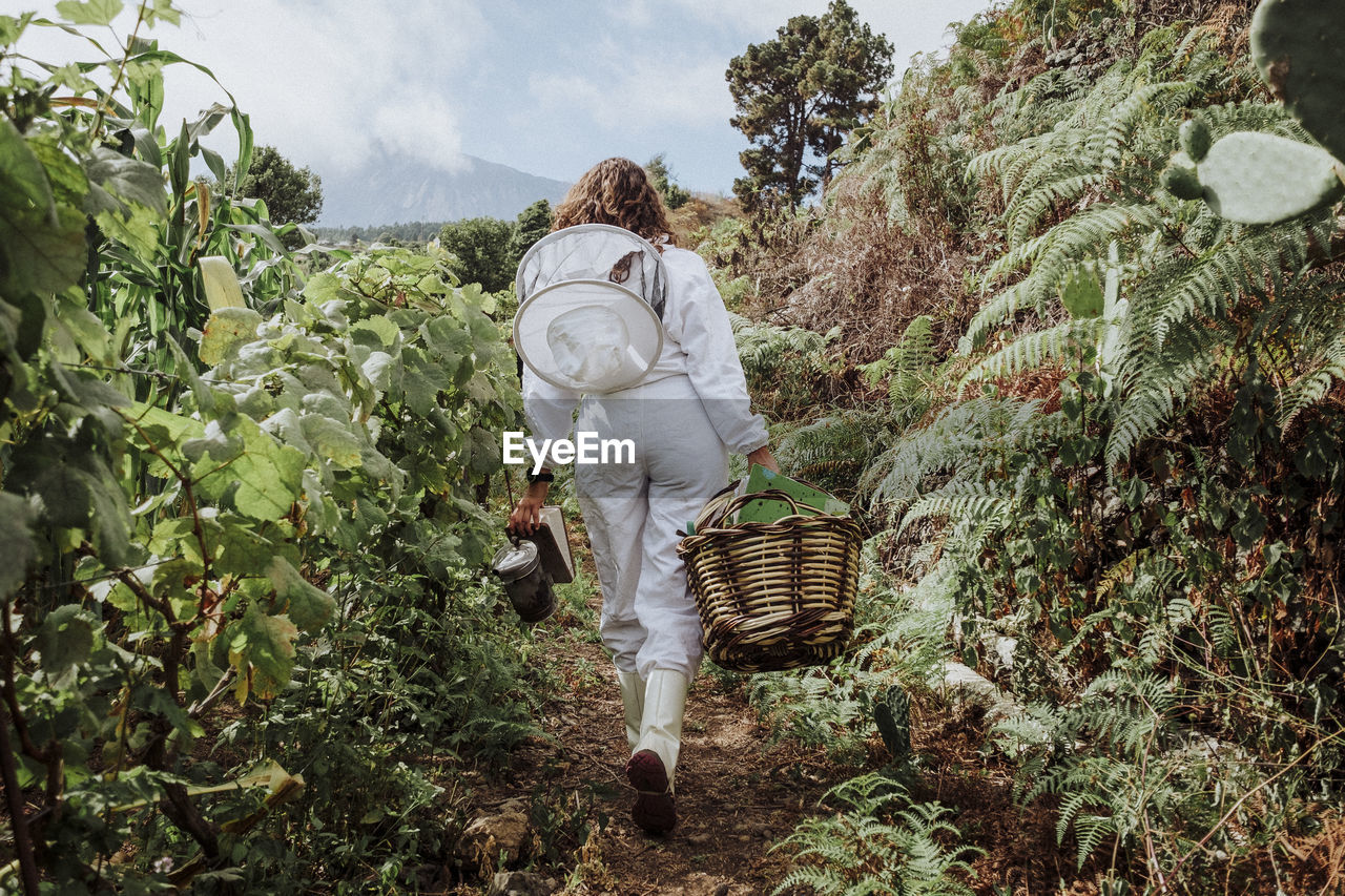 REAR VIEW OF SENIOR MAN WALKING IN BASKET ON PLANT