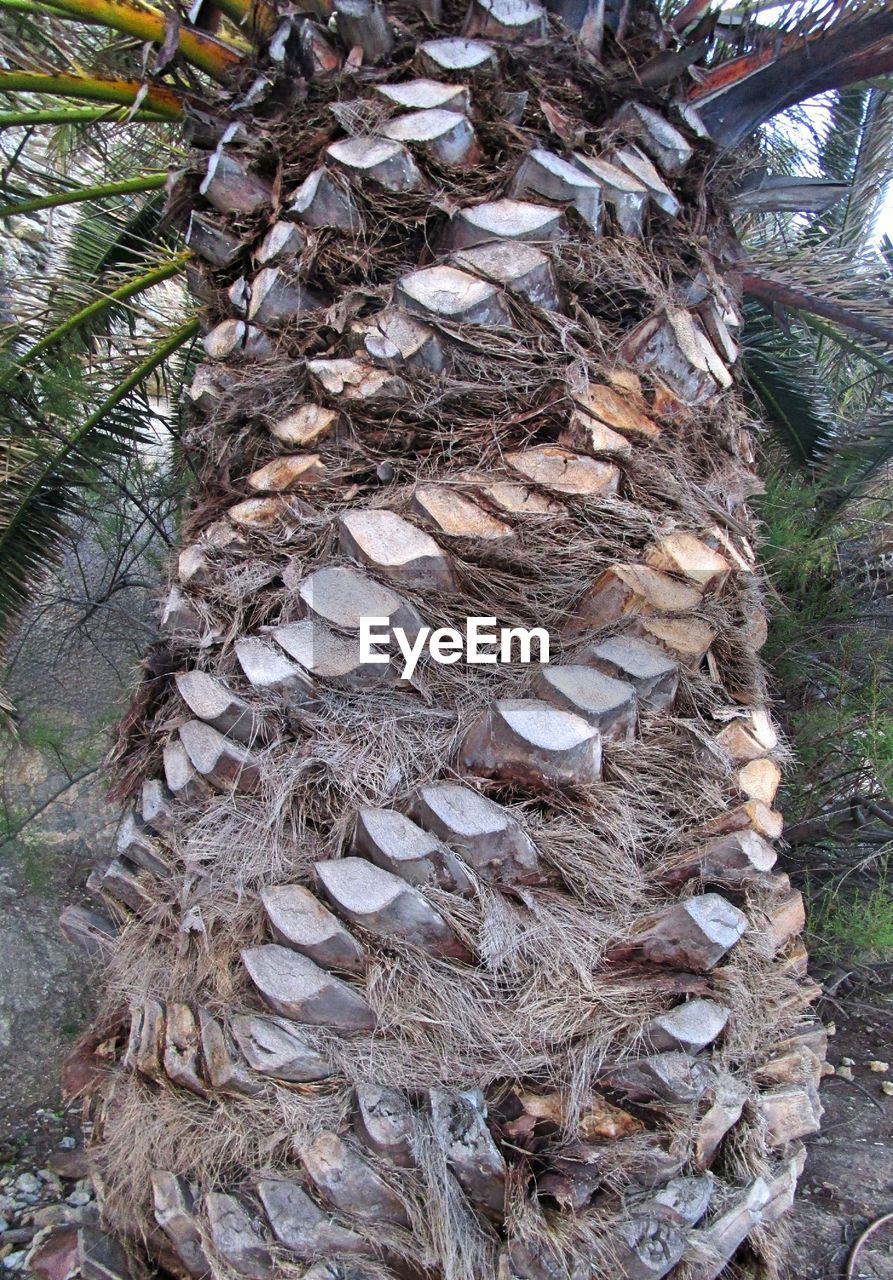 Low angle view of palm tree trunk