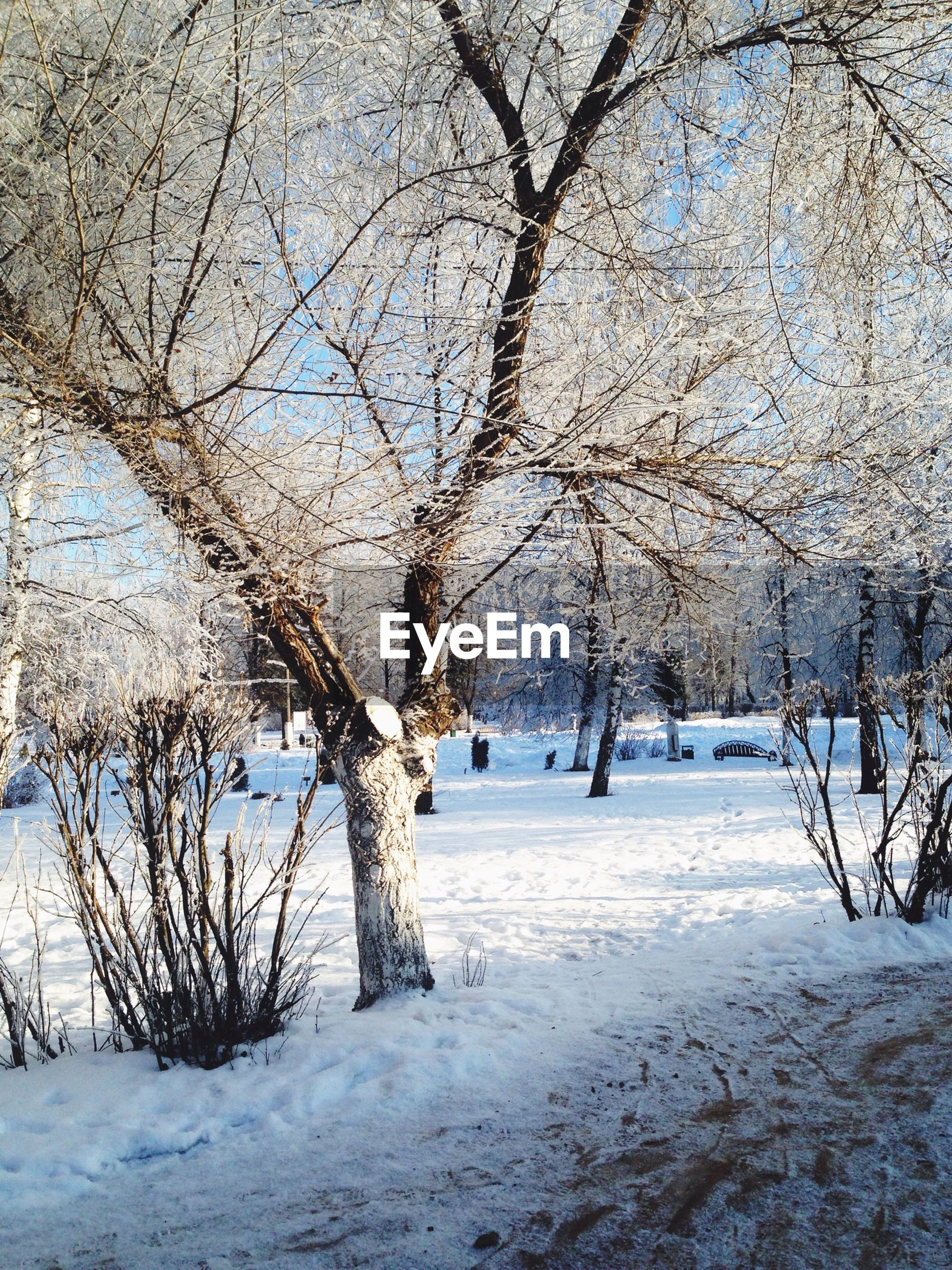 snow, winter, cold temperature, season, weather, covering, bare tree, tree, frozen, branch, white color, nature, field, landscape, covered, tranquility, tranquil scene, beauty in nature, cold, snow covered