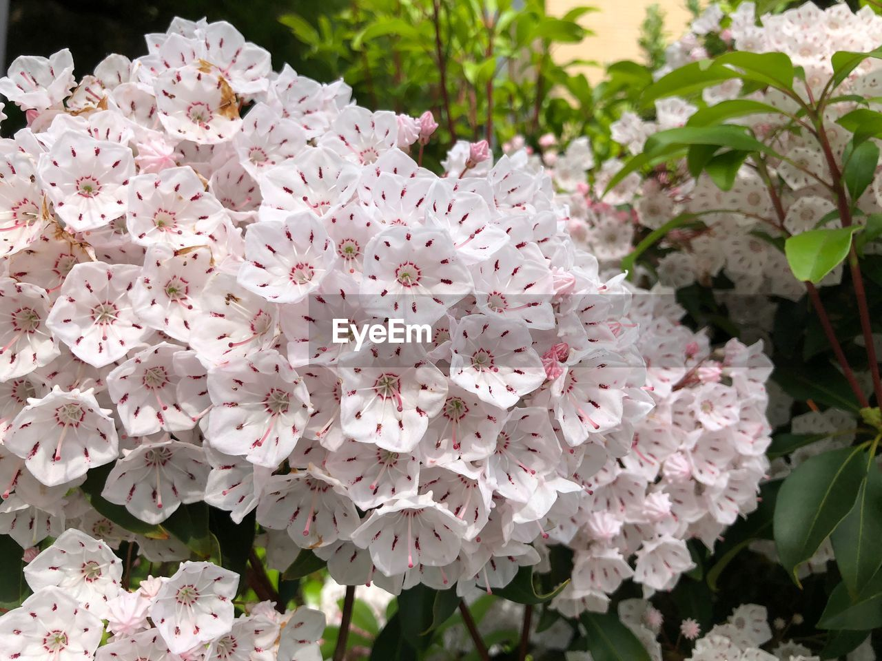 flower, flowering plant, beauty in nature, plant, vulnerability, fragility, petal, freshness, growth, close-up, nature, plant part, leaf, inflorescence, pink color, flower head, blossom, day, no people, botany, outdoors, springtime, pollen, lilac, bunch of flowers, spring