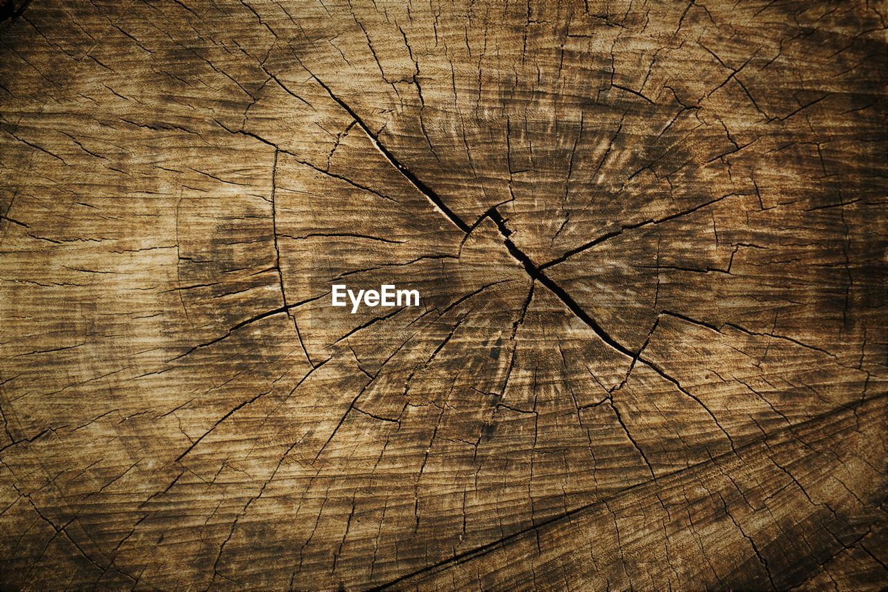 wood - material, backgrounds, textured, tree, brown, full frame, wood, cracked, pattern, no people, tree stump, tree trunk, bark, wood grain, trunk, rough, natural pattern, tree ring, close-up, plant, textured effect, concentric