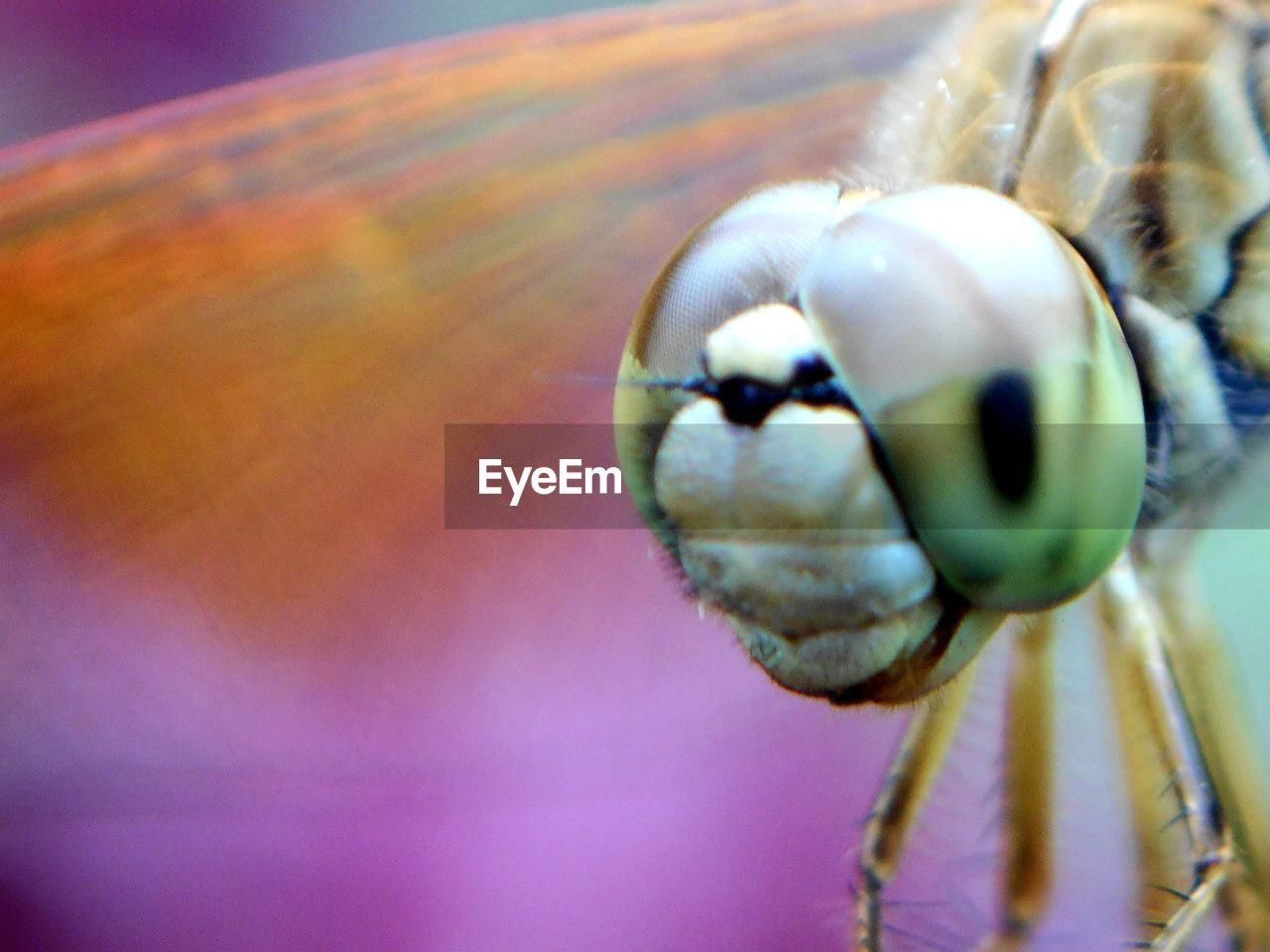 one animal, animal themes, close-up, animals in the wild, no people, insect, nature, outdoors, day, mammal