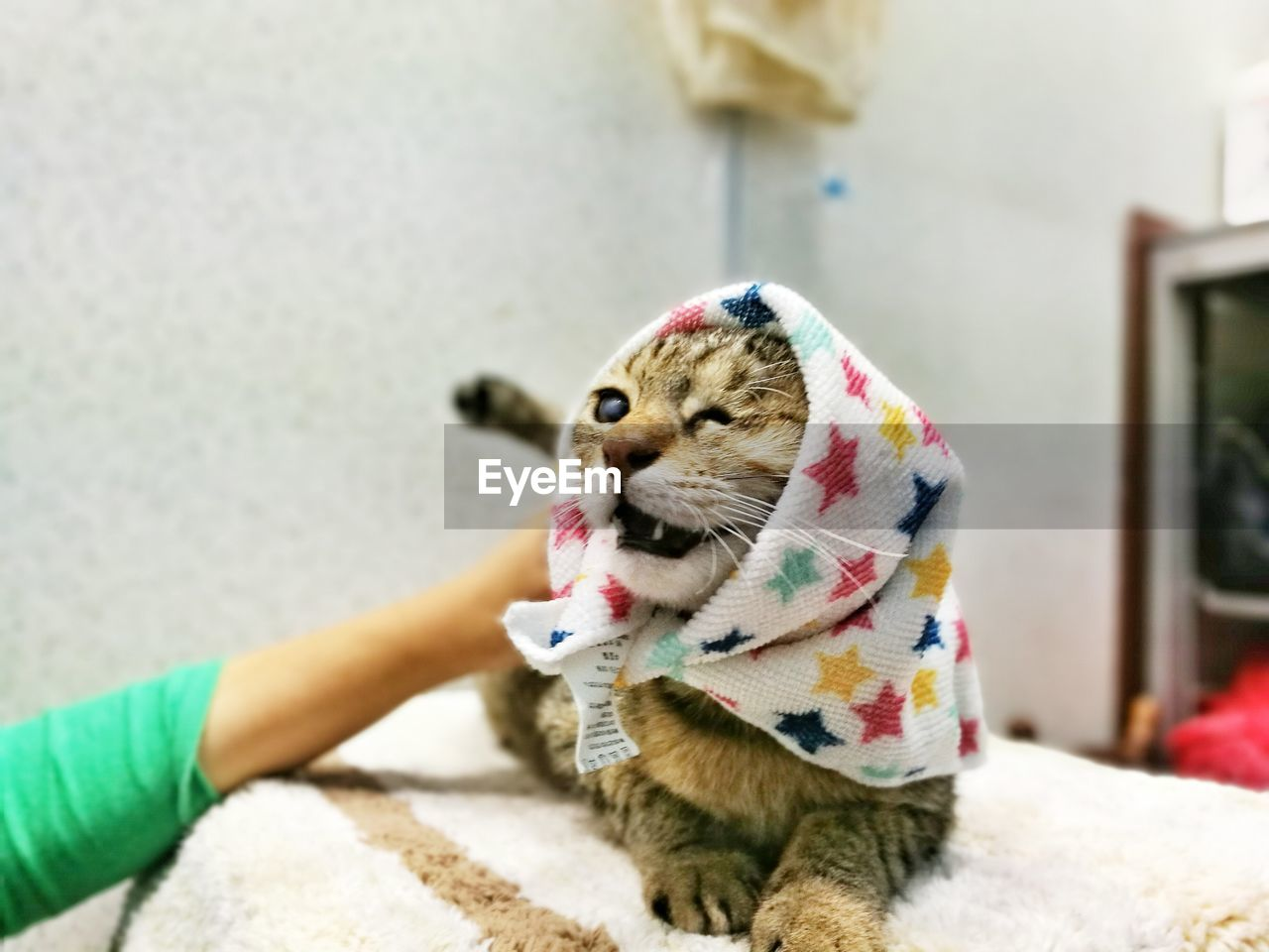 Cropped Hand Pampering Cat Covered In Napkin On Bed
