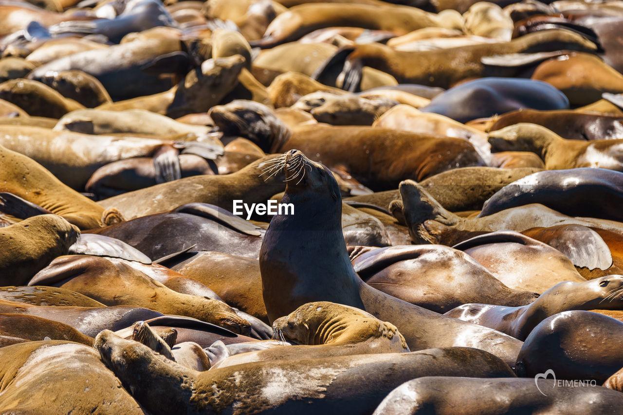 Seal Colony On Beach