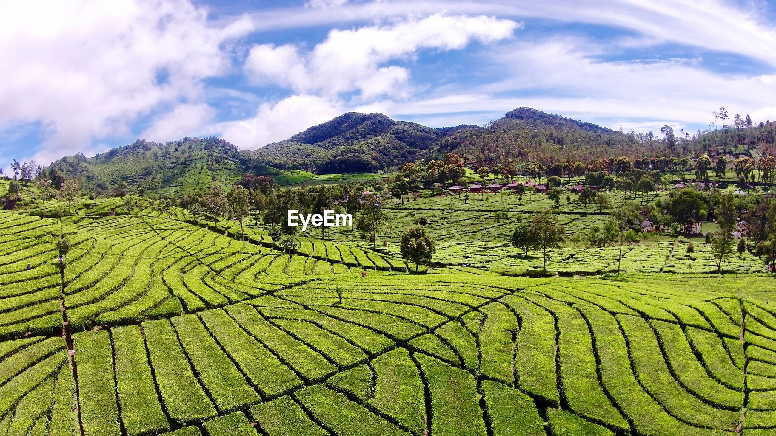 Scenic view of tea plantation by mountains against sky