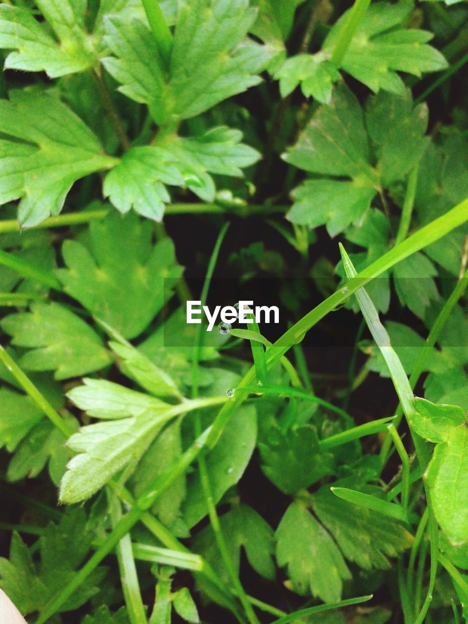 green color, plant part, leaf, plant, growth, one animal, animal themes, animal, animal wildlife, animals in the wild, nature, no people, close-up, day, invertebrate, insect, high angle view, outdoors, beauty in nature, focus on foreground