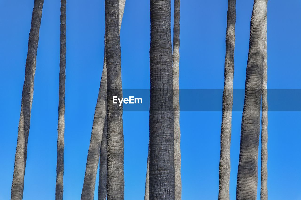 sky, blue, day, low angle view, no people, nature, clear sky, architecture, built structure, outdoors, pattern, sunlight, tall - high, side by side, metal, tranquility, in a row, trunk, land, tree trunk