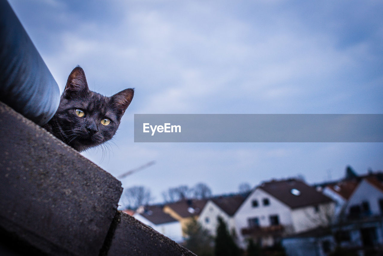 domestic cat, feline, domestic animals, animal themes, pets, one animal, mammal, sky, cloud - sky, whisker, looking at camera, portrait, focus on foreground, architecture, no people, outdoors, building exterior, built structure, low angle view, day, close-up