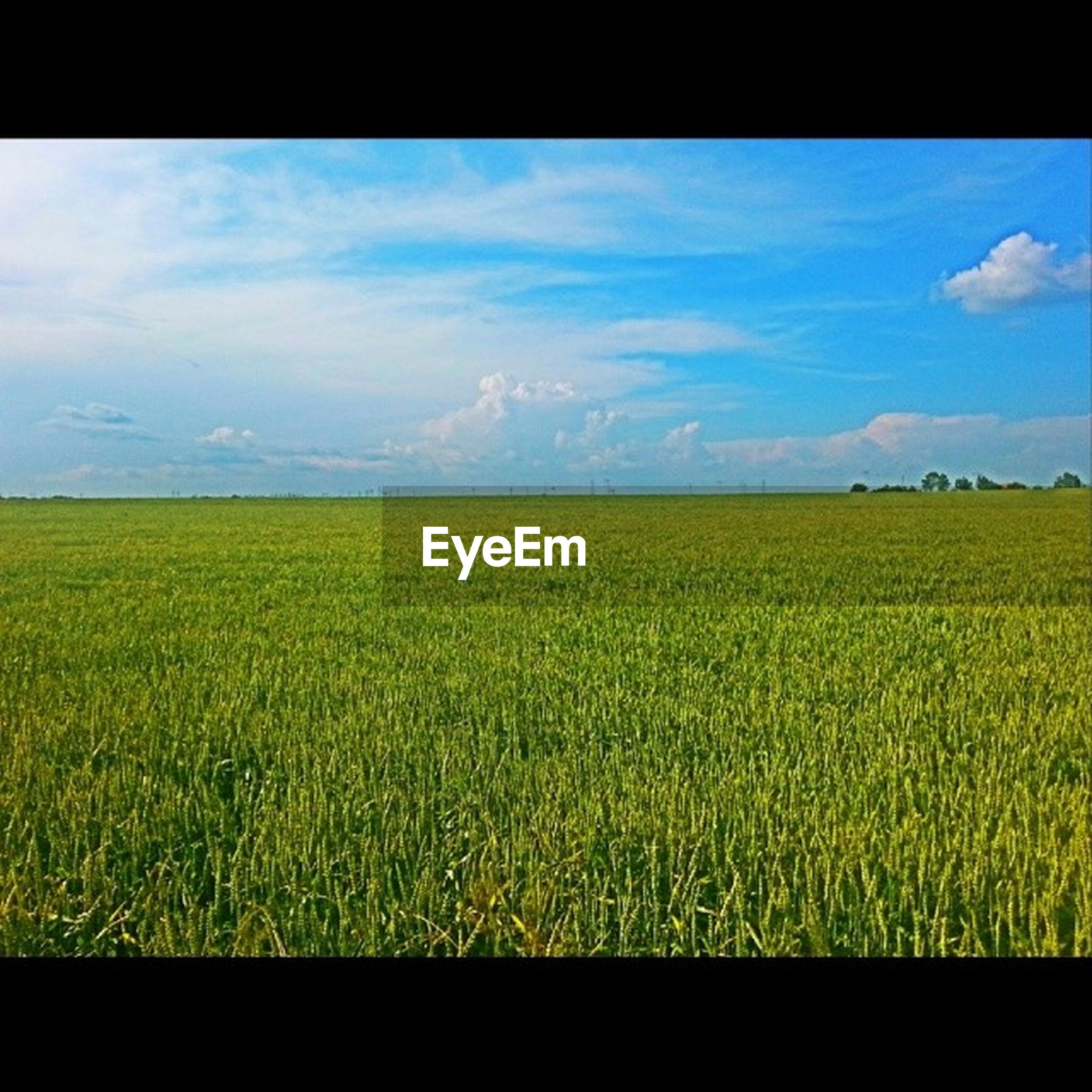 sky, landscape, field, rural scene, tranquil scene, agriculture, beauty in nature, yellow, scenics, tranquility, cloud - sky, transfer print, nature, farm, cloud, growth, crop, horizon over land, cloudy, auto post production filter
