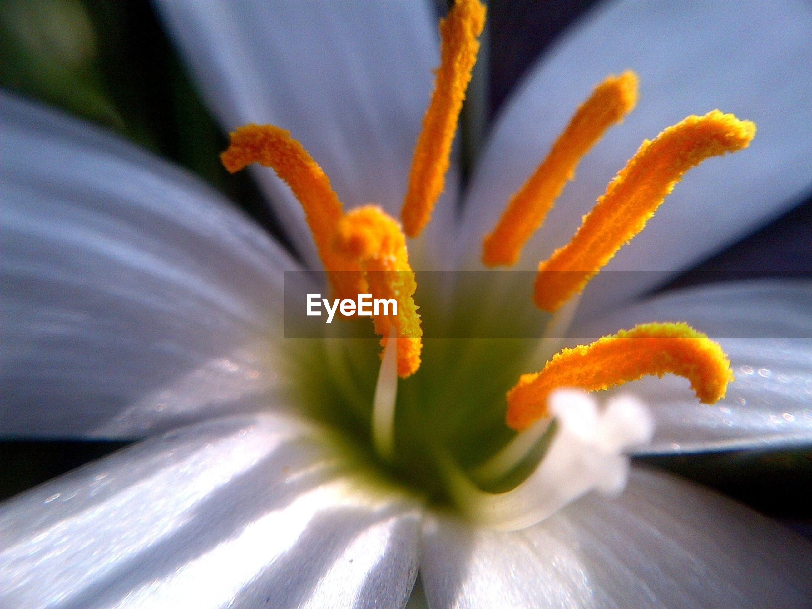 flower, petal, freshness, flower head, fragility, yellow, close-up, beauty in nature, growth, pollen, nature, blooming, single flower, plant, focus on foreground, stamen, in bloom, selective focus, blossom, no people