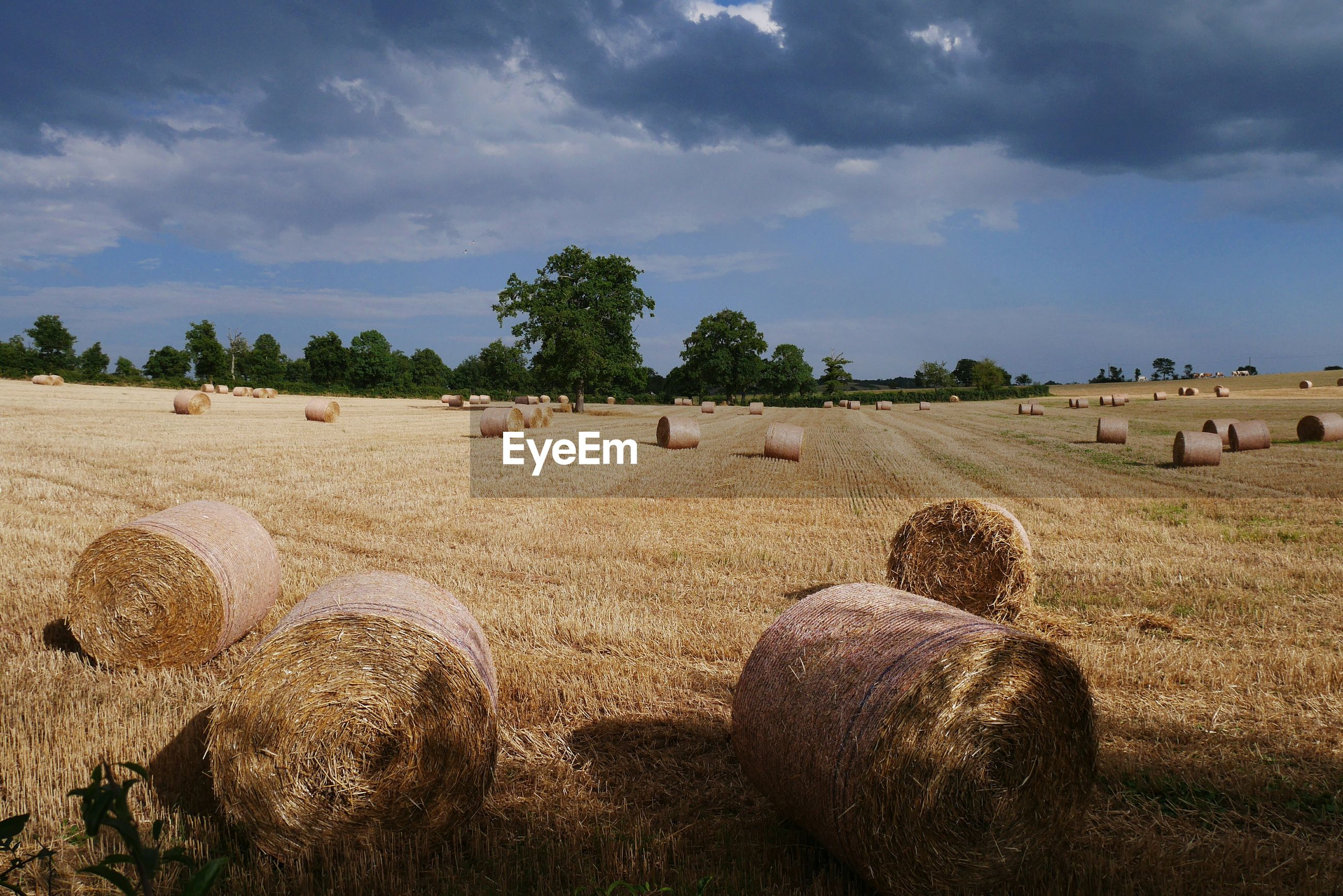 VIEW OF HAY BALES ON FIELD AGAINST SKY