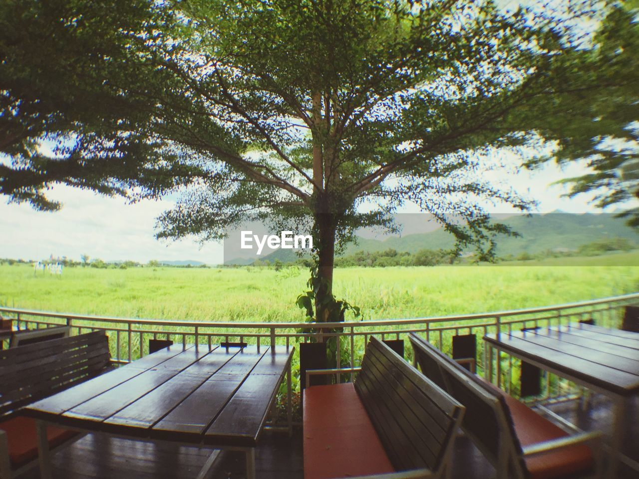 tree, railing, nature, day, sky, green color, scenics, no people, growth, outdoors, beauty in nature, wood - material, landscape, tranquility, grass, rural scene, forest, water
