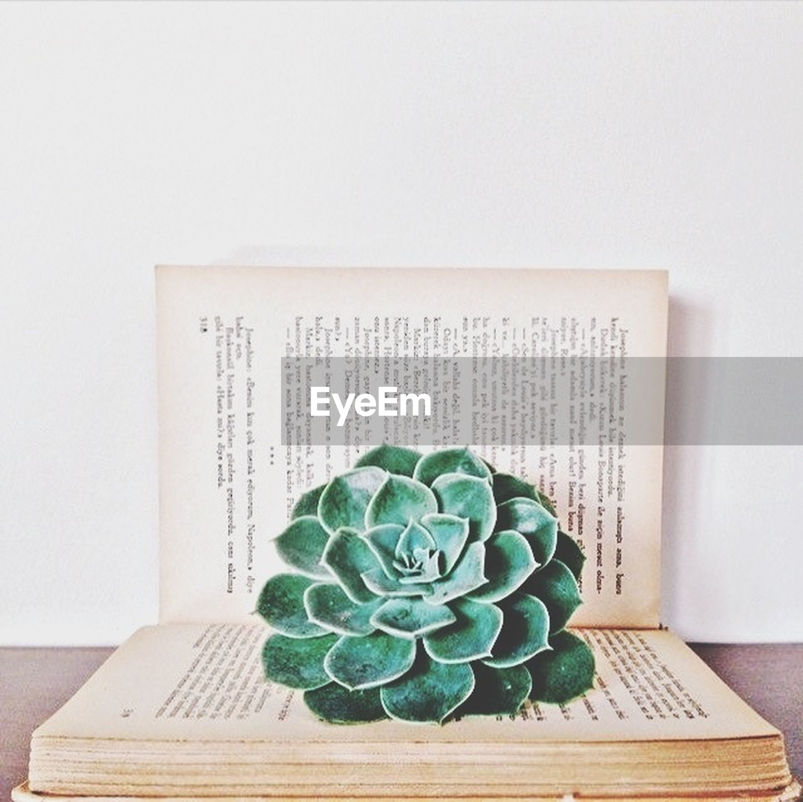 indoors, table, still life, freshness, green color, wood - material, leaf, wall - building feature, close-up, potted plant, high angle view, plant, home interior, white background, no people, food and drink, arrangement, studio shot, flower, green