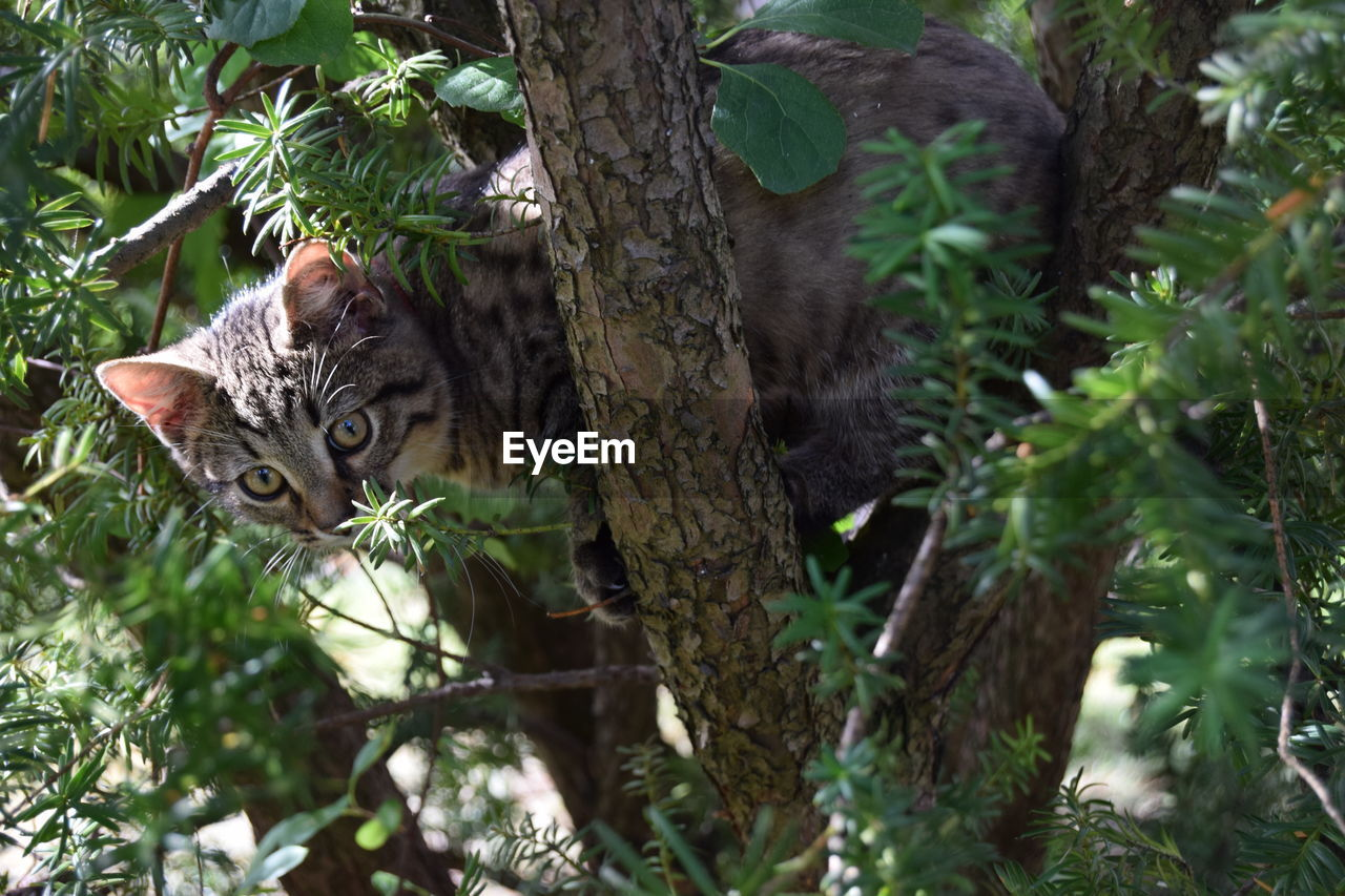Close-Up Of Tabby Cat Sitting On Tree