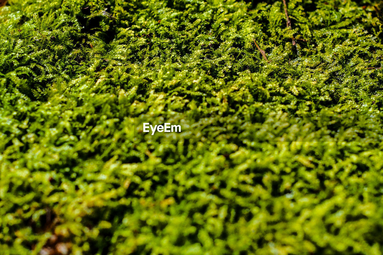 selective focus, plant, green color, full frame, nature, no people, growth, backgrounds, day, beauty in nature, field, foliage, plant part, outdoors, land, leaf, high angle view, close-up, lush foliage, tranquility, leaves