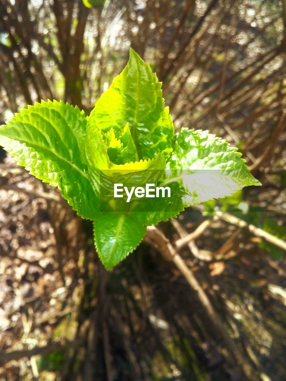 growth, green color, leaf, plant, nature, close-up, freshness, no people, focus on foreground, day, outdoors, beauty in nature, fragility, fern, tree