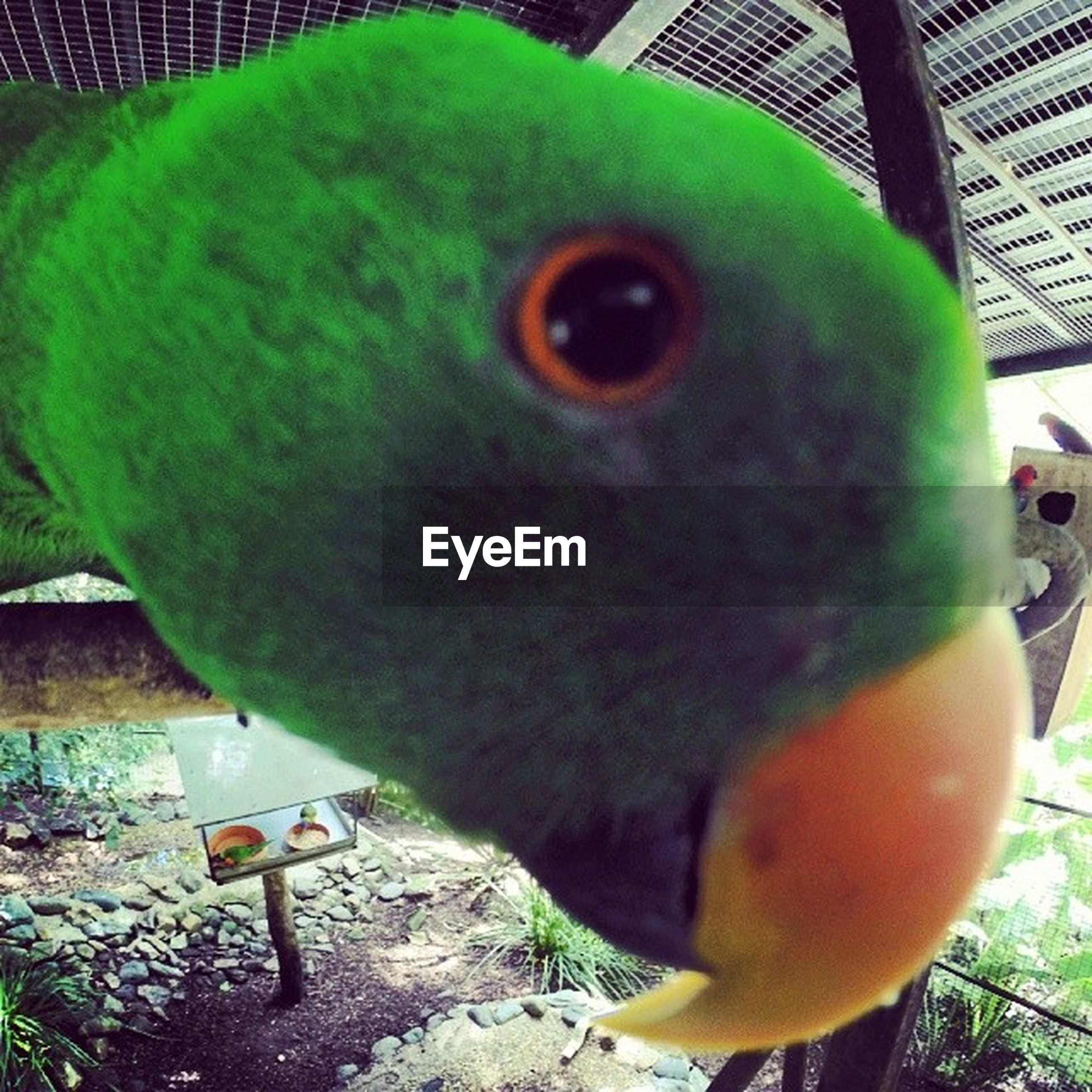 bird, high angle view, green color, one animal, close-up, animal themes, day, outdoors, no people, food and drink, tree, nature, wood - material, parrot, animals in the wild, wildlife, yellow, built structure, food