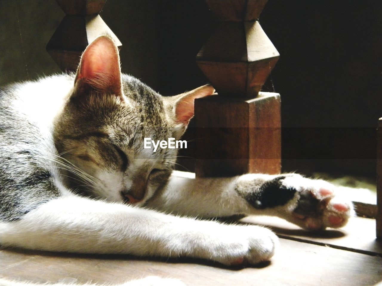 domestic cat, animal themes, domestic animals, pets, feline, one animal, mammal, relaxation, no people, indoors, day, close-up