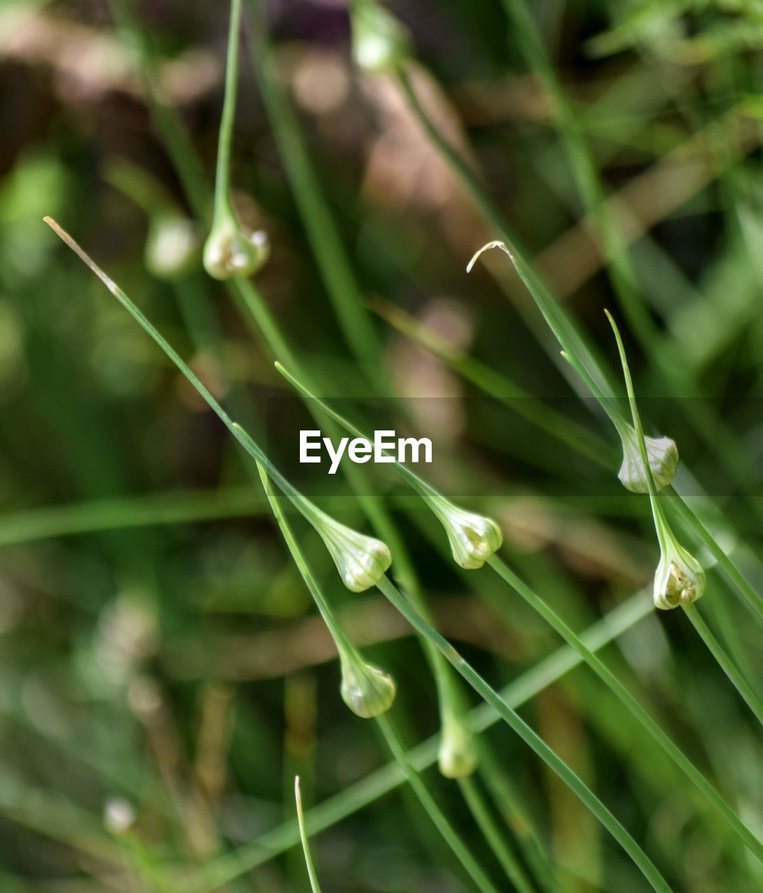growth, green color, plant, close-up, beauty in nature, selective focus, freshness, fragility, no people, nature, vulnerability, day, focus on foreground, wet, plant part, outdoors, leaf, tranquility, plant stem, blade of grass, purity, dew, raindrop