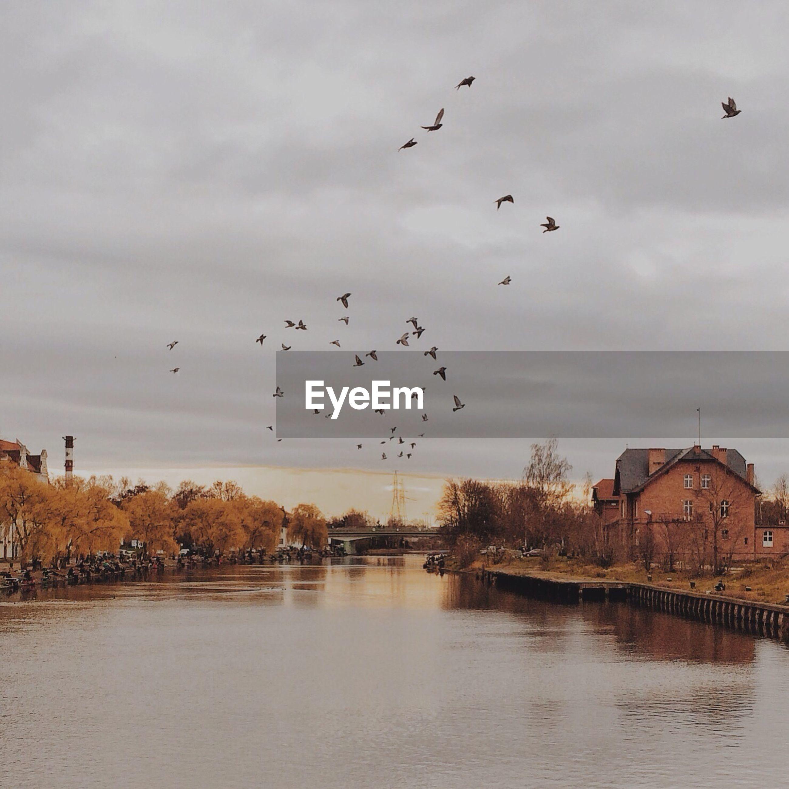 Flock of birds flying over river