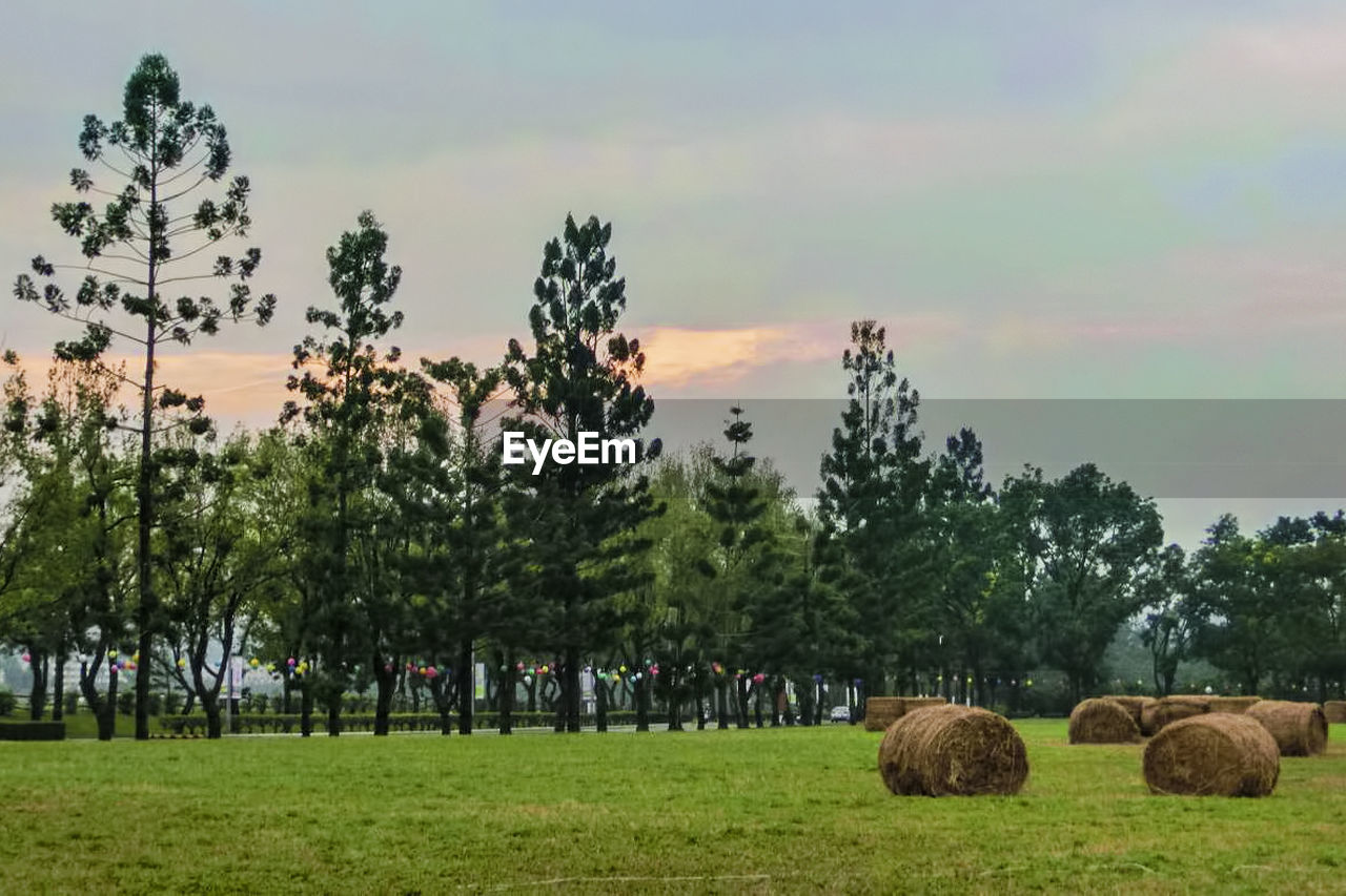 tree, bale, grass, nature, landscape, field, sky, beauty in nature, agriculture, tranquility, hay, tranquil scene, scenics, hay bale, outdoors, no people, growth, day, sunset