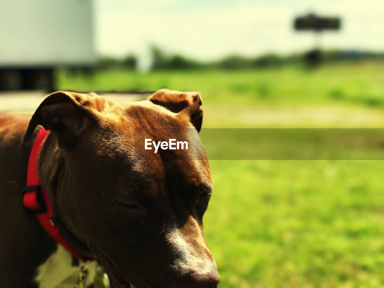 mammal, domestic animals, domestic, pets, one animal, animal themes, animal, dog, canine, vertebrate, focus on foreground, day, looking, animal body part, looking away, field, no people, nature, outdoors, land, animal head, animal mouth