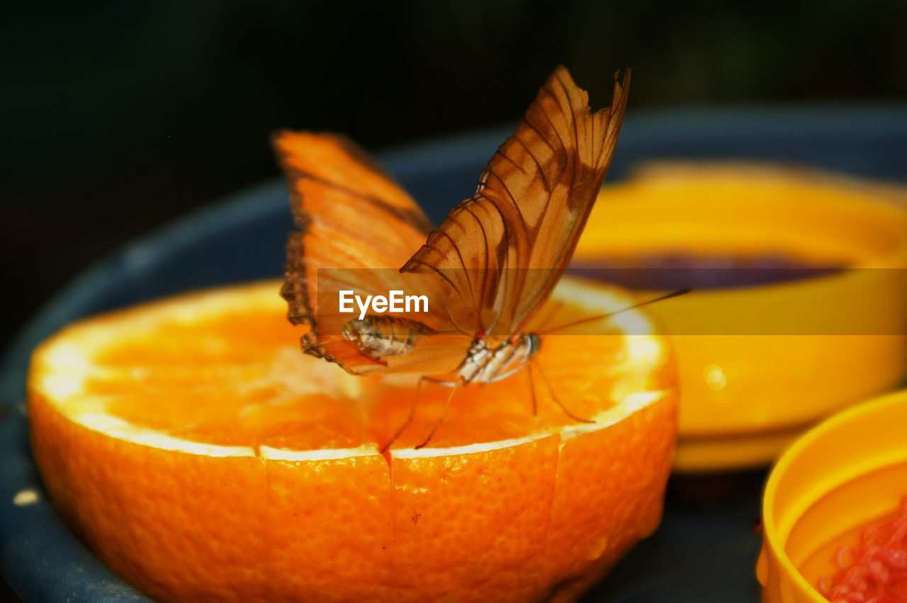 orange color, food, food and drink, close-up, healthy eating, freshness, wellbeing, fruit, no people, still life, pumpkin, orange, focus on foreground, orange - fruit, citrus fruit, halloween, indoors, table, day, creativity, butterfly - insect
