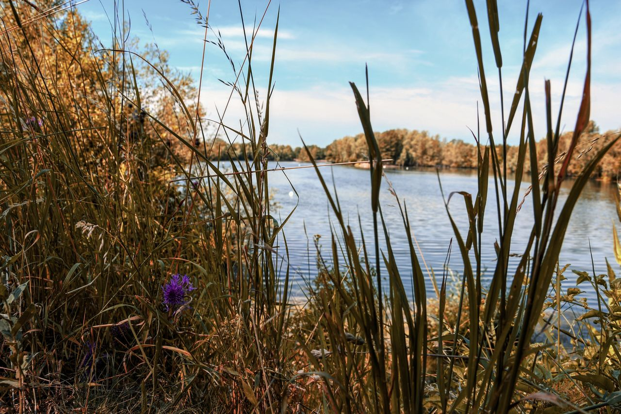 plant, water, sky, tranquility, beauty in nature, growth, nature, cloud - sky, tranquil scene, no people, grass, scenics - nature, day, lake, land, non-urban scene, beach, outdoors, marram grass