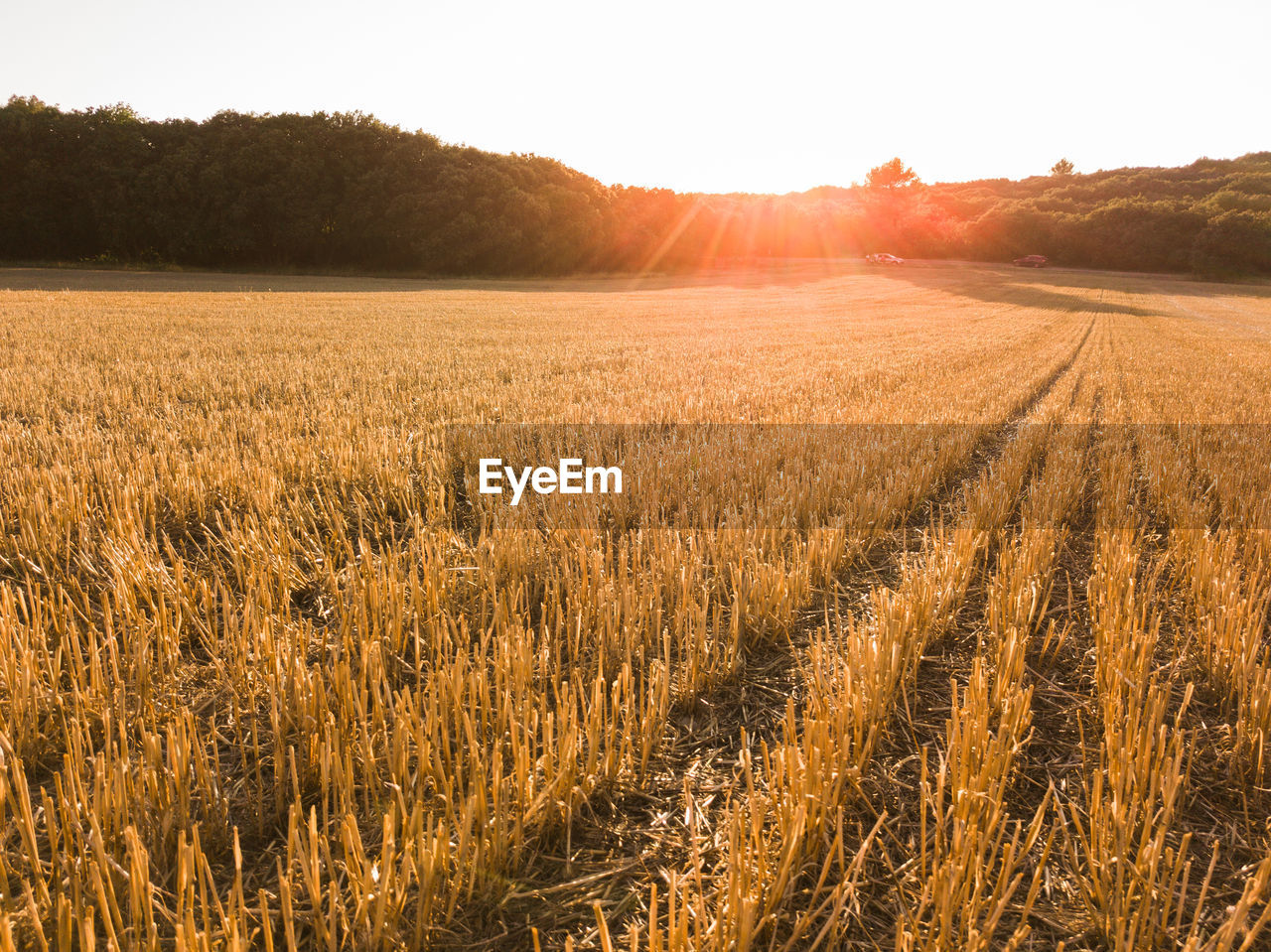 agriculture, landscape, field, rural scene, crop, land, sky, plant, cereal plant, tranquility, growth, environment, farm, tranquil scene, nature, no people, wheat, beauty in nature, scenics - nature, sunlight, outdoors, stalk