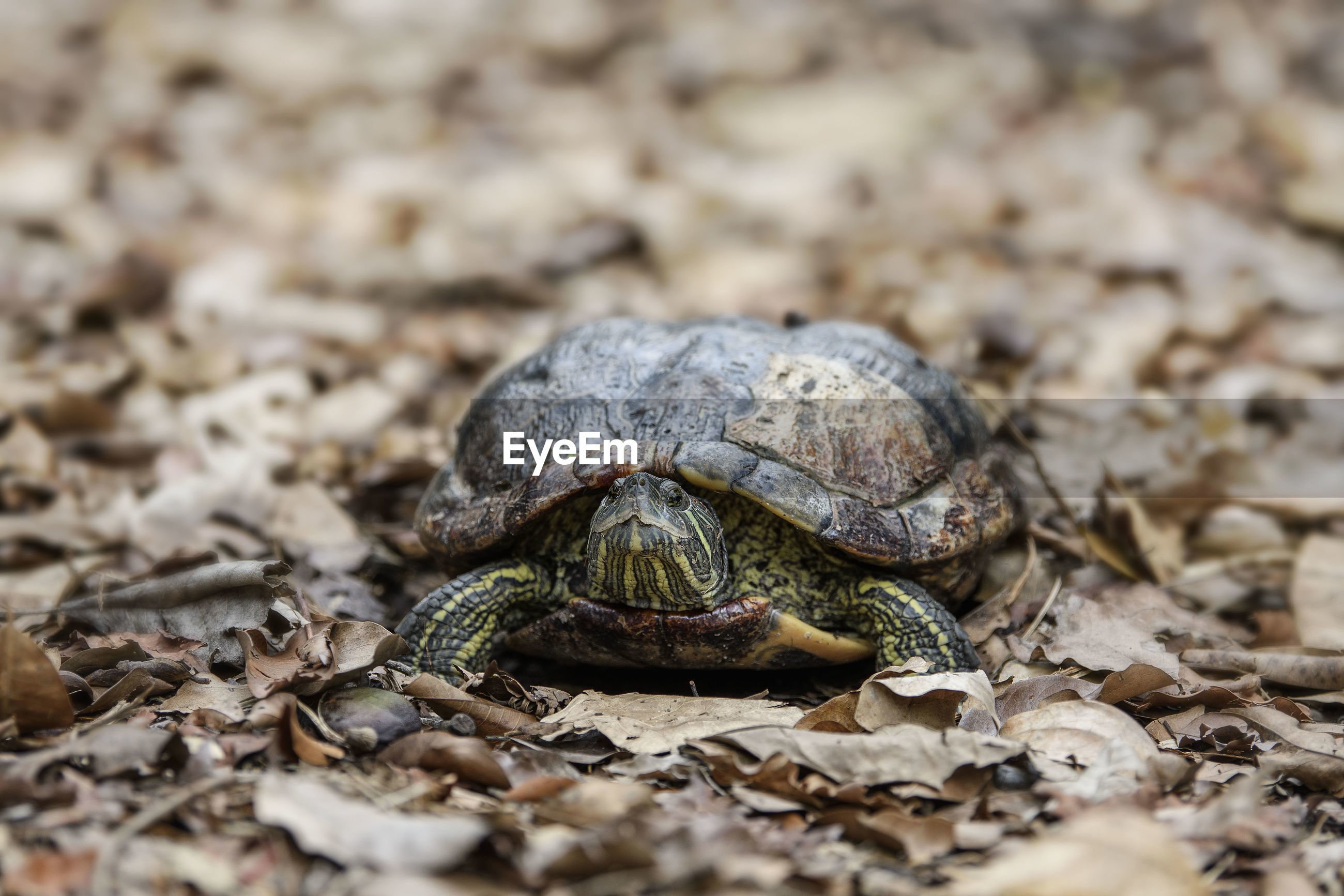 Close-up of turtle on ground