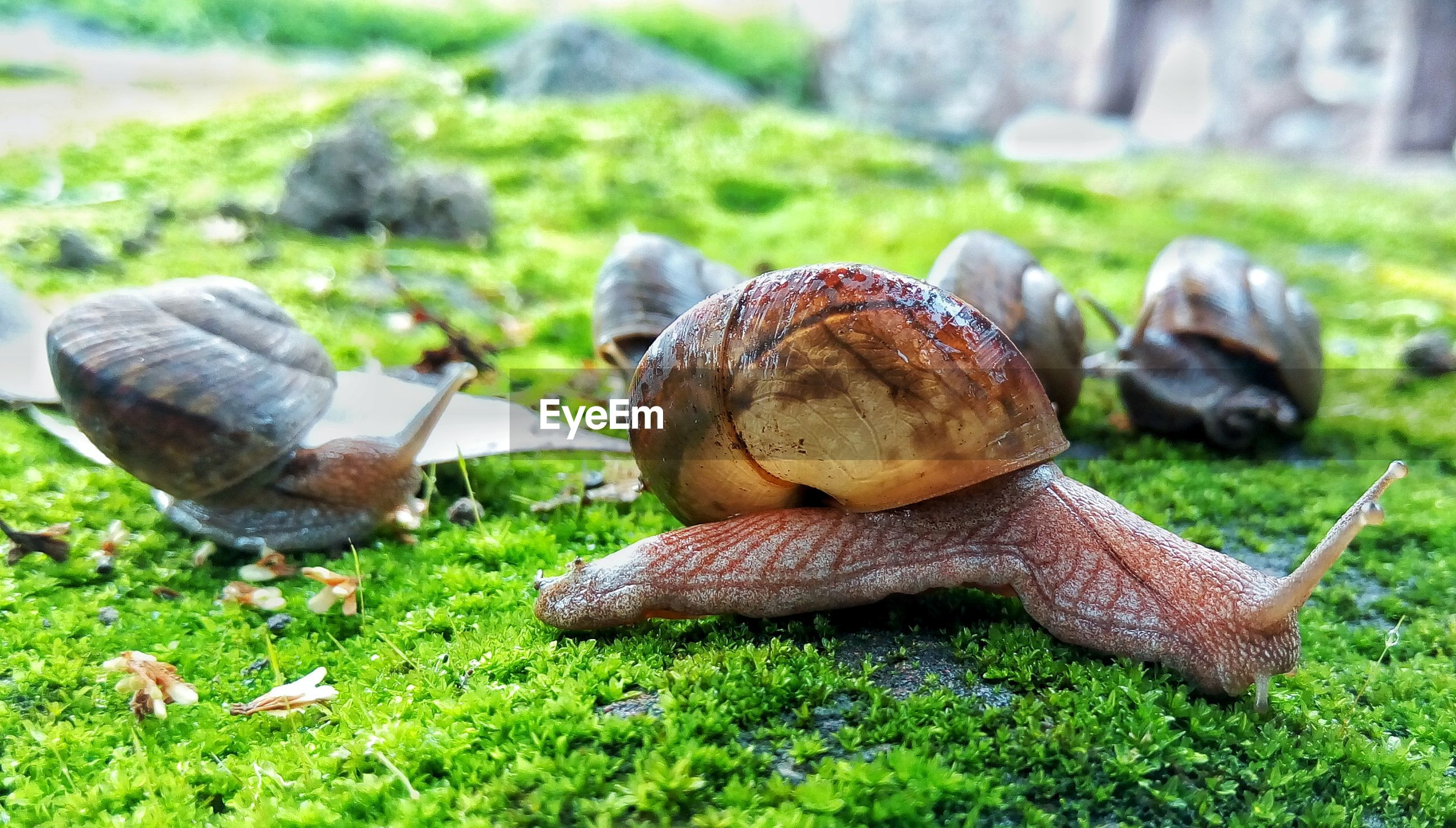 Close-up of snails crawling outdoors