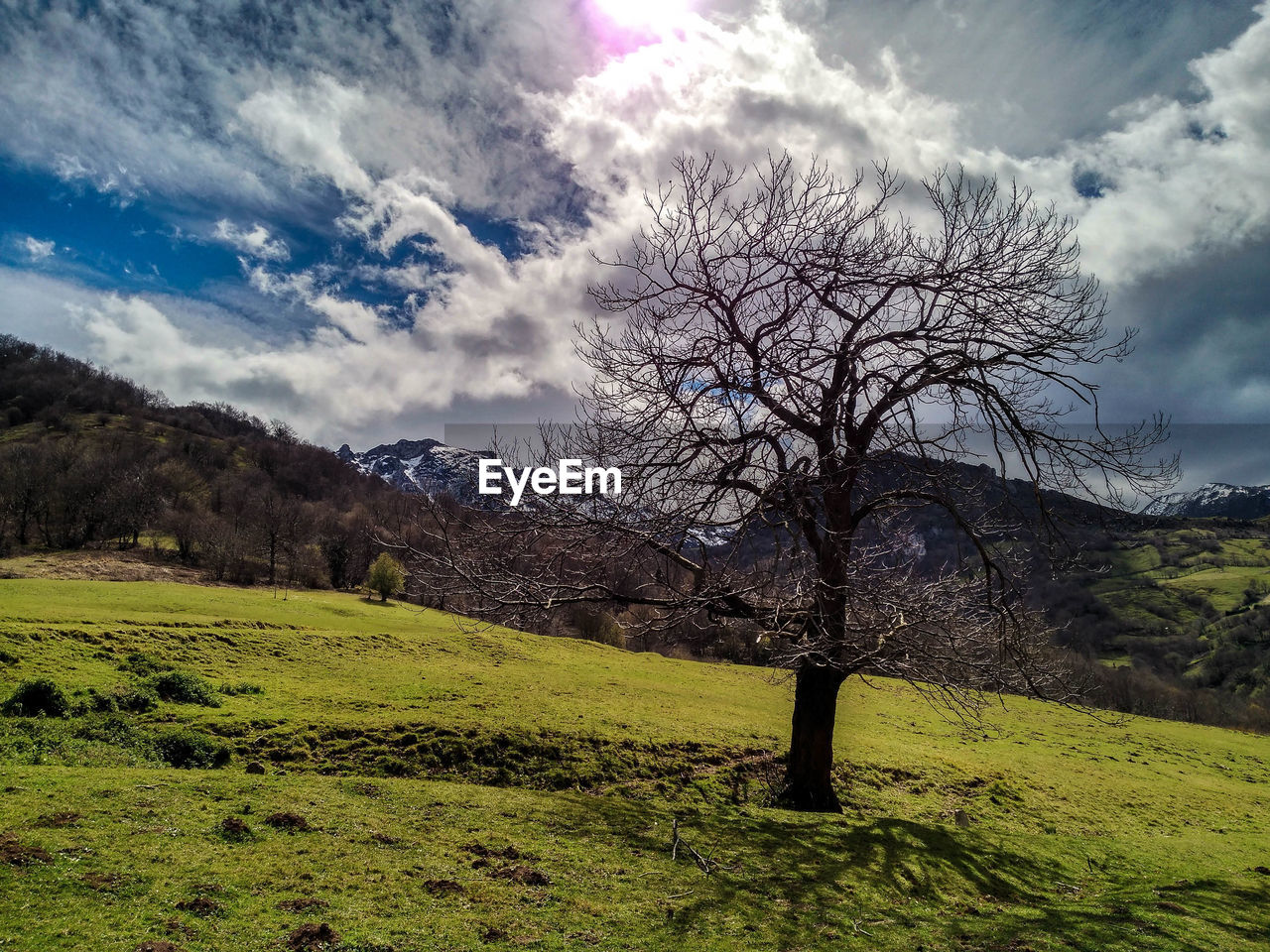 sky, cloud - sky, tree, plant, beauty in nature, environment, tranquil scene, tranquility, landscape, scenics - nature, nature, no people, land, non-urban scene, bare tree, field, grass, day, branch, outdoors, isolated