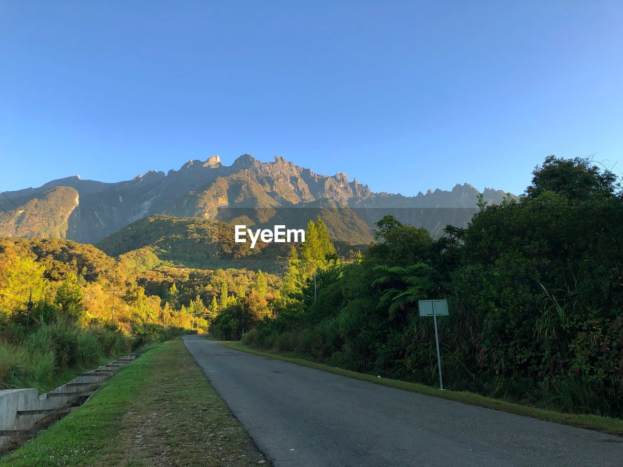 road, plant, sky, mountain, direction, the way forward, tree, transportation, nature, beauty in nature, no people, clear sky, scenics - nature, tranquility, tranquil scene, day, non-urban scene, blue, diminishing perspective, growth, mountain range, outdoors
