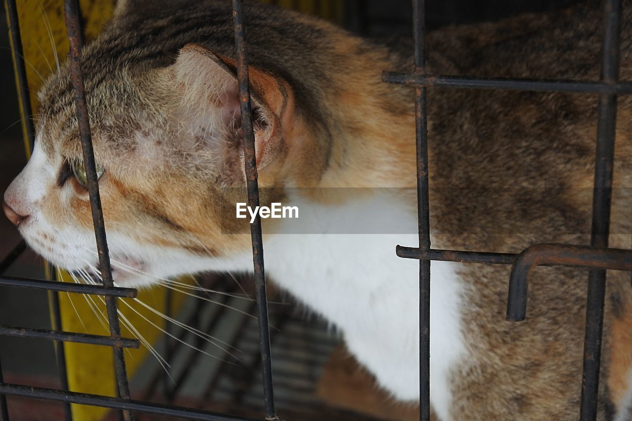 animal, one animal, animal themes, mammal, vertebrate, pets, domestic, cage, domestic animals, animals in captivity, feline, cat, no people, close-up, metal, animal body part, animal wildlife, animal head, relaxation, focus on foreground, whisker