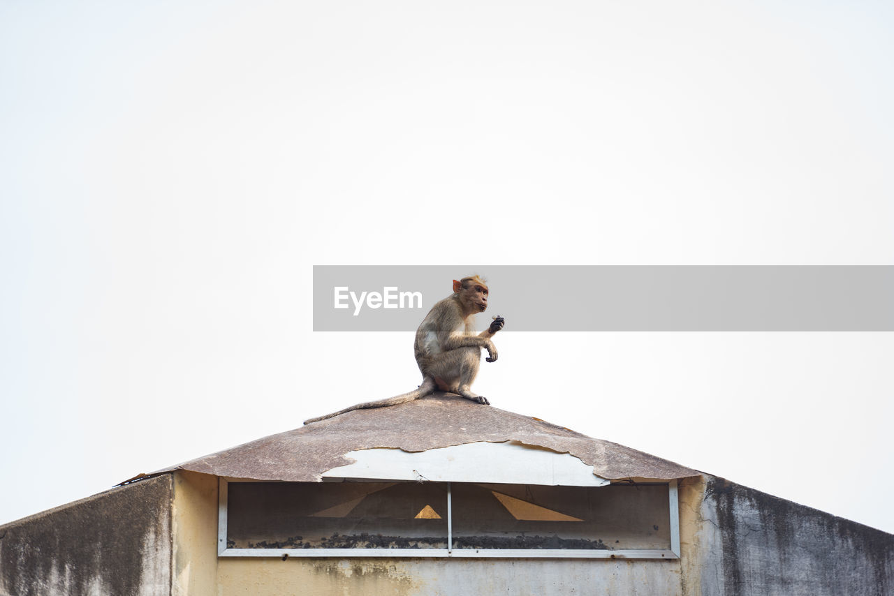 Low Angle View Of Monkey On Roof Against Clear Sky