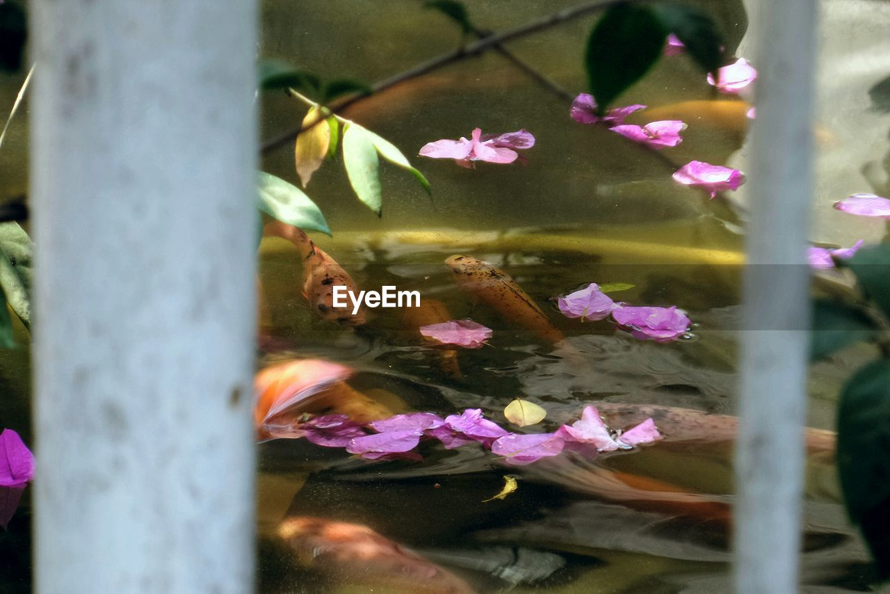 Flowers floating in pond