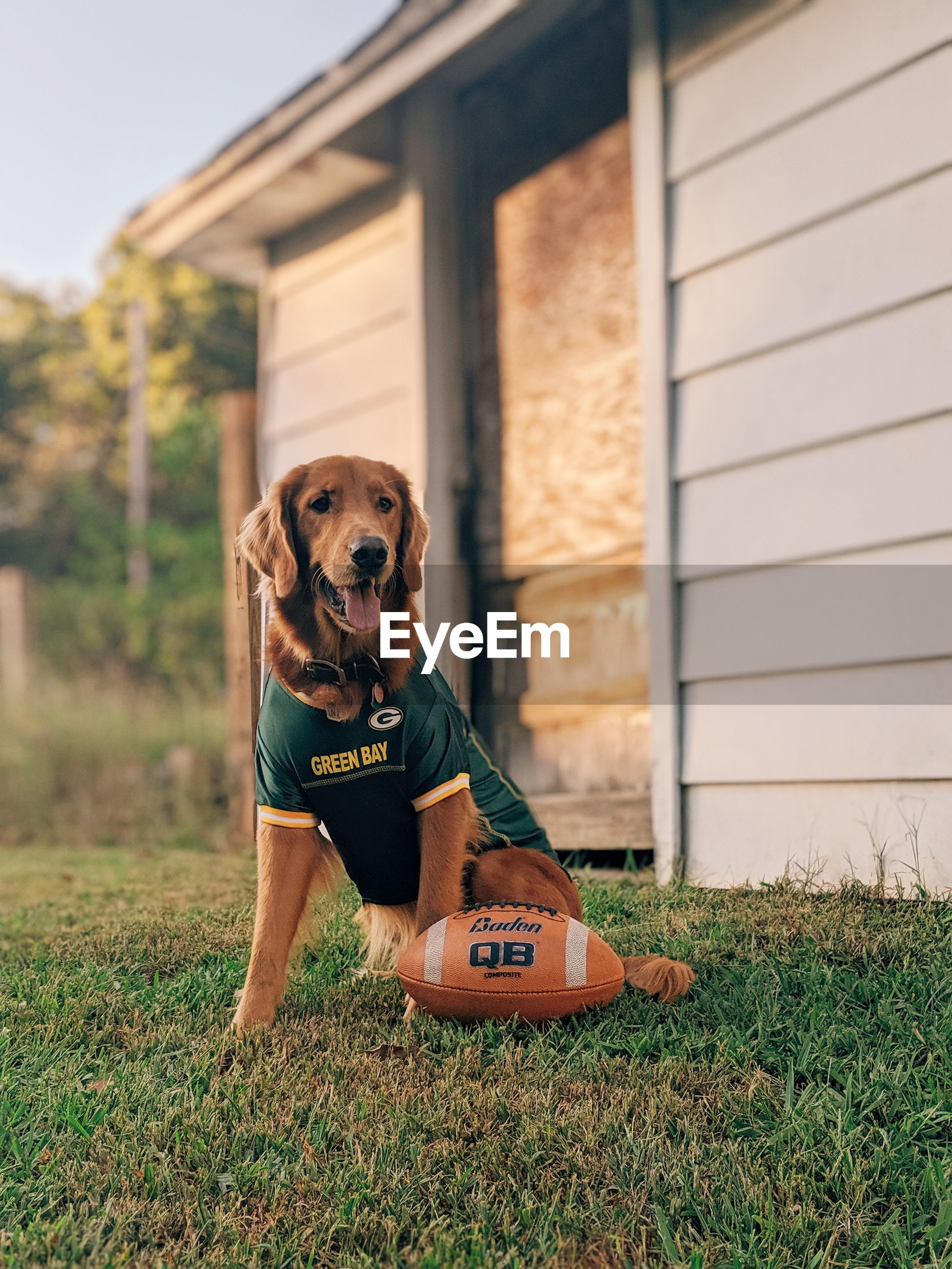 PORTRAIT OF DOG STANDING IN FIELD