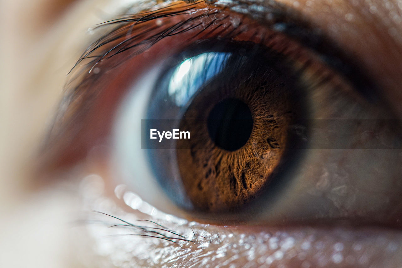 eye, eyesight, eyelash, extreme close-up, human eye, sensory perception, close-up, human body part, iris - eye, one person, eyeball, body part, selective focus, macro, unrecognizable person, real people, adult, women, brown eyes, eyelid, eyebrow, beautiful woman