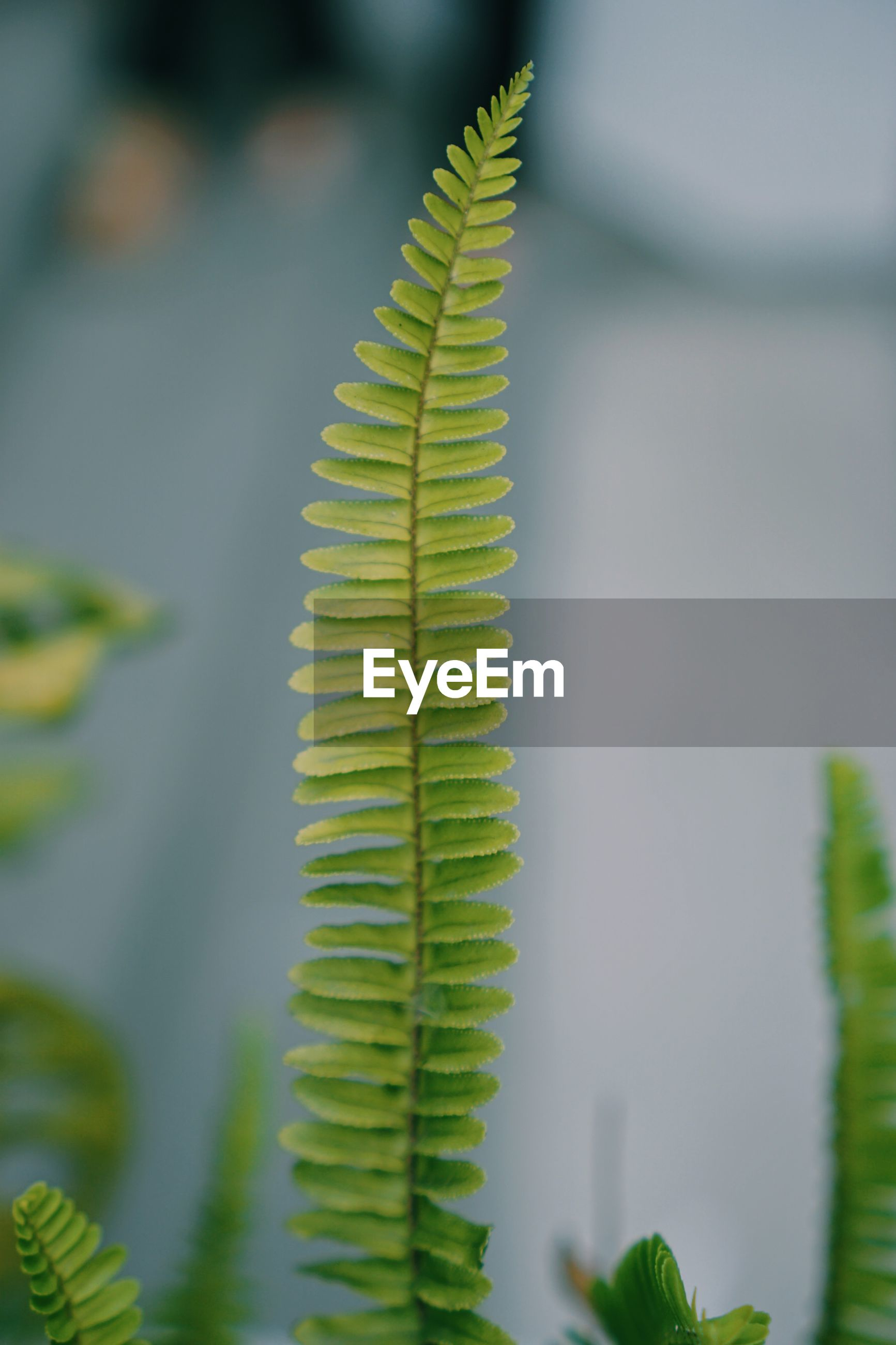 CLOSE-UP OF FERN PLANT