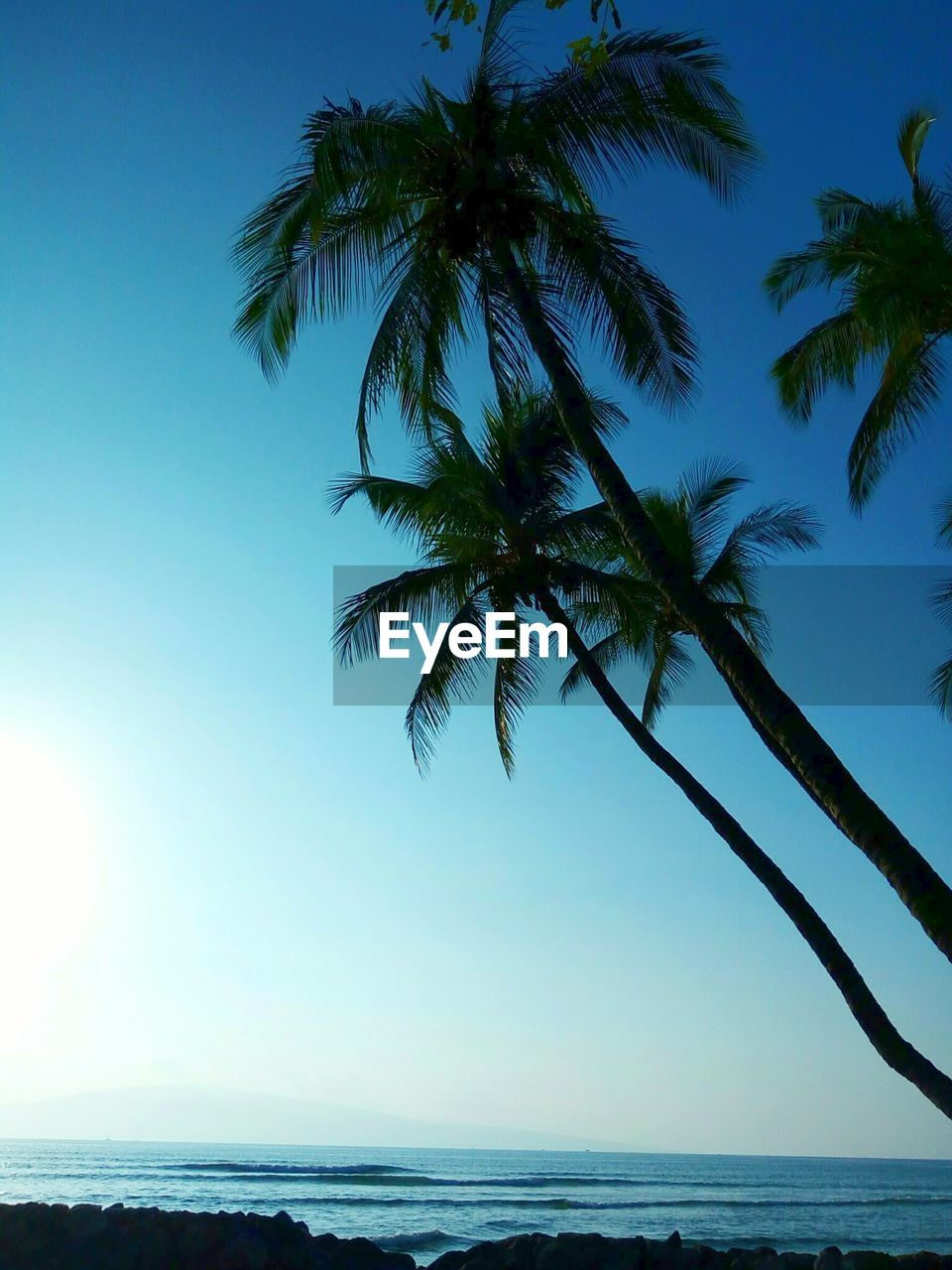 sea, palm tree, water, tranquil scene, horizon over water, scenics, tranquility, nature, beauty in nature, clear sky, beach, sky, outdoors, no people, blue, tree, day